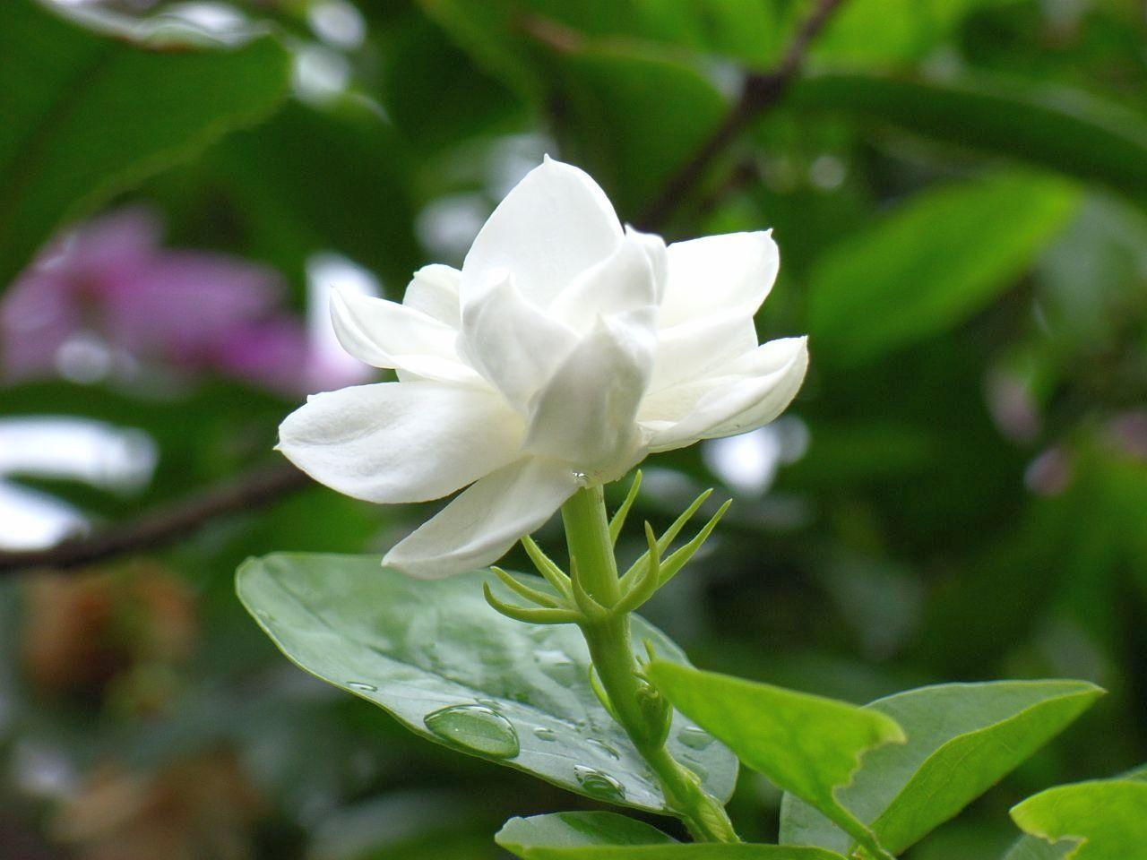 jasmine flower Jasmine is very popular because of its sweet smelling flower but it does grow fast & densely i don't use power tools but you could give it a go.
