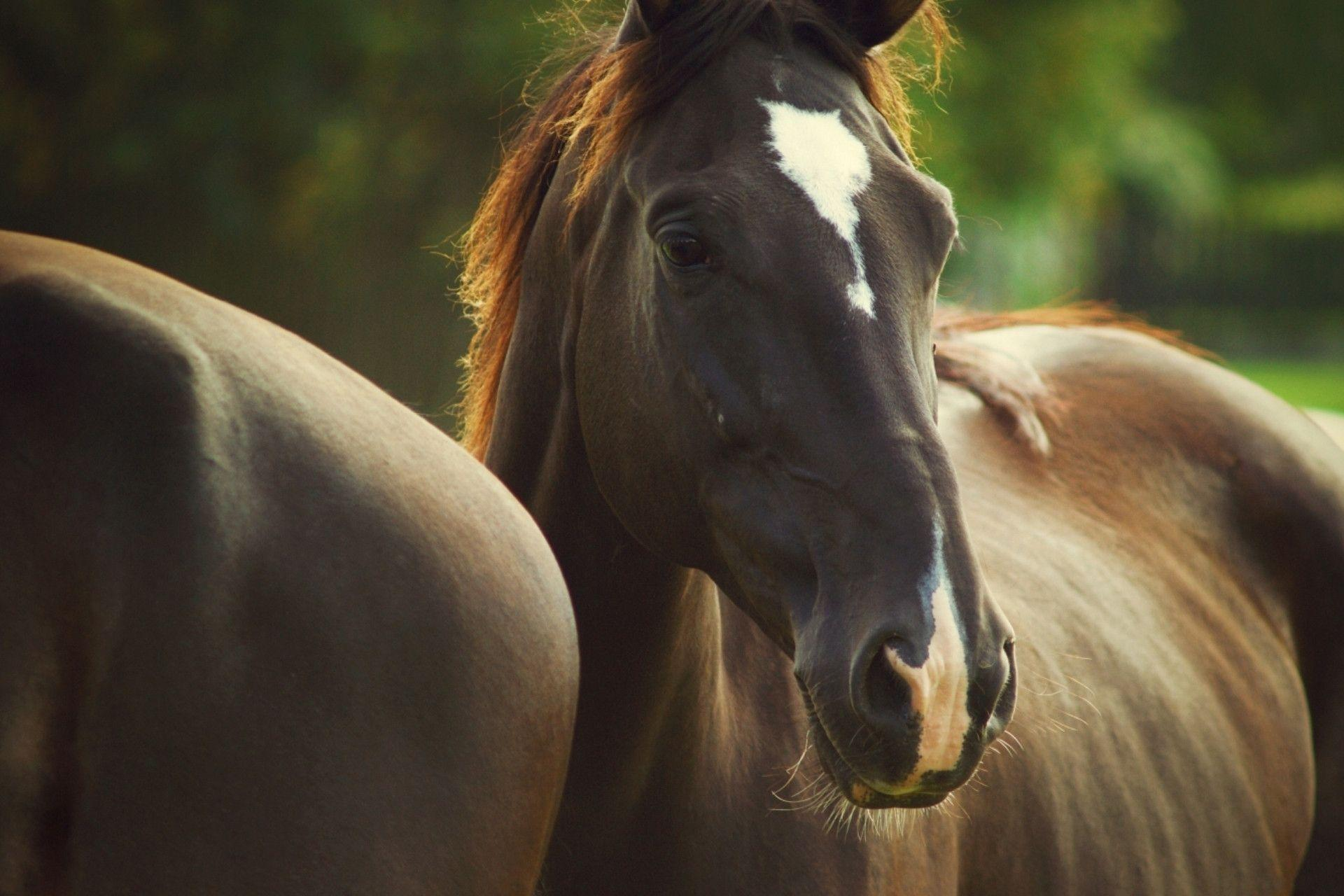 horse cute horses wallpapers animals brown desktop funny coat quality royal monochrome skyscapes related mane spot portrait widescreen wall wallpapersafari