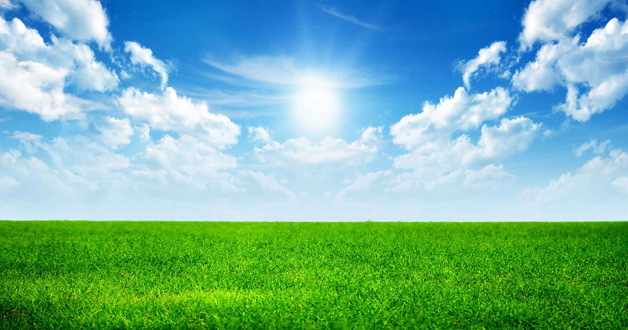 Wallpapers For > Green Grass And Sky Backgrounds