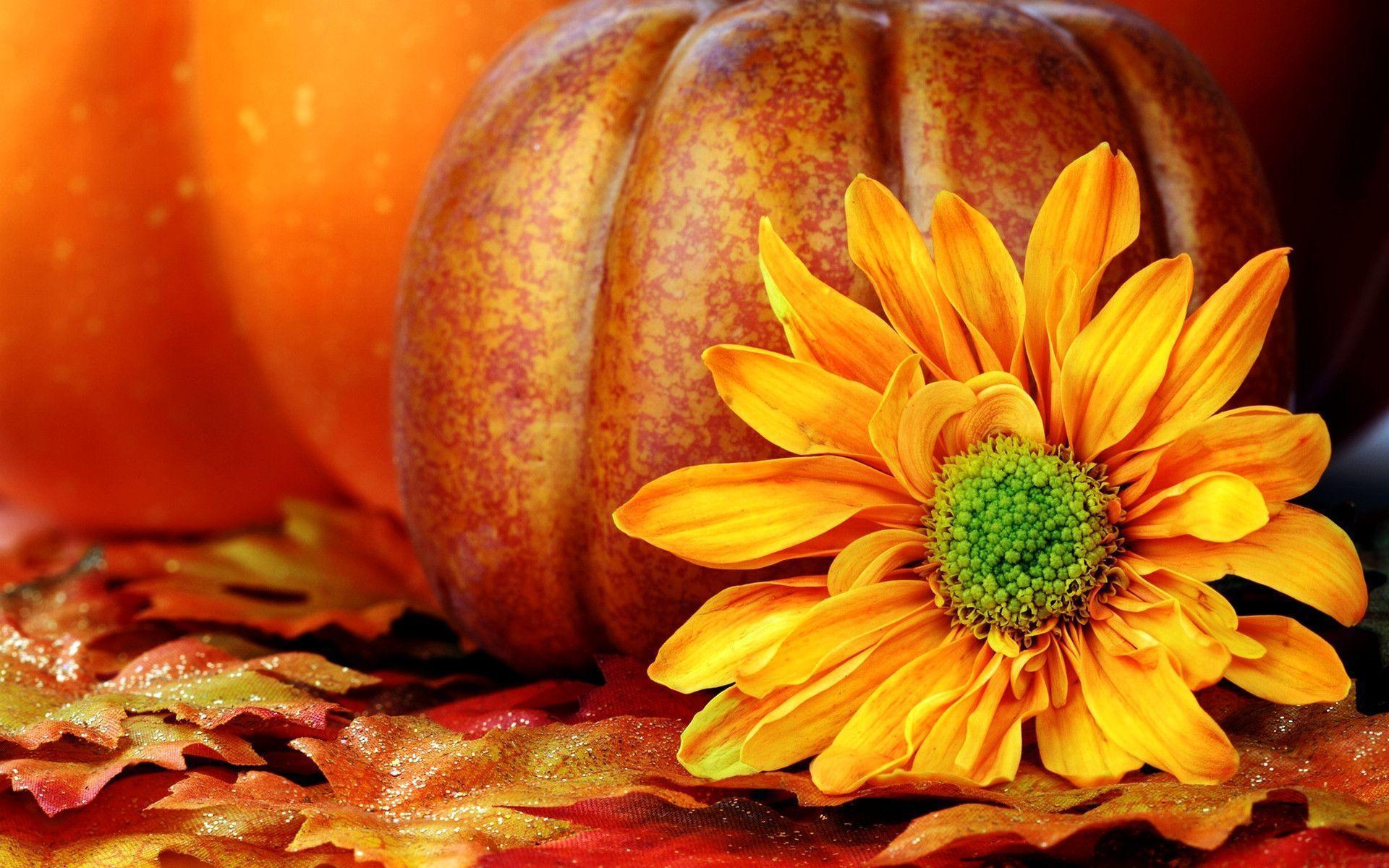 3d pumpkin wallpaper - photo #13