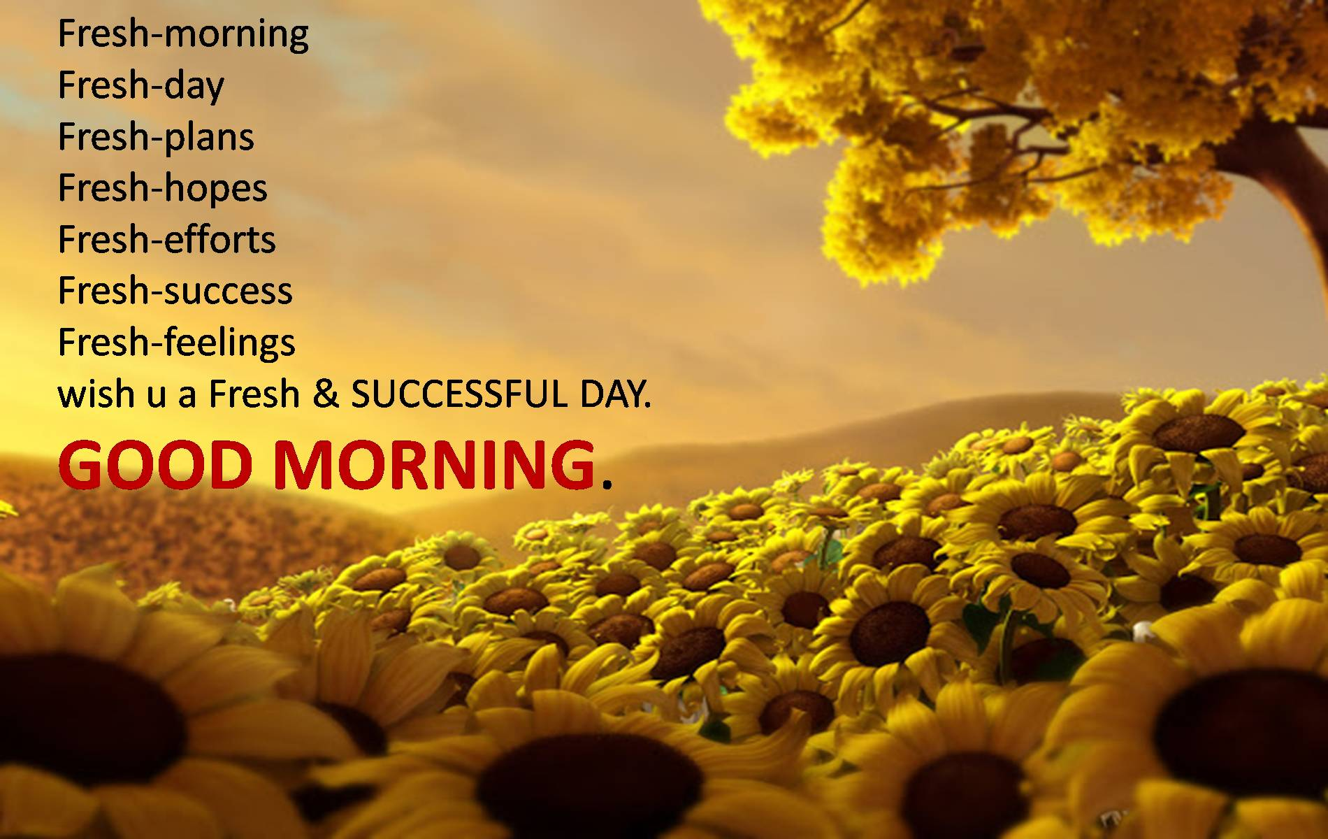 Gud Morning Wallpaper Collection For Free Download