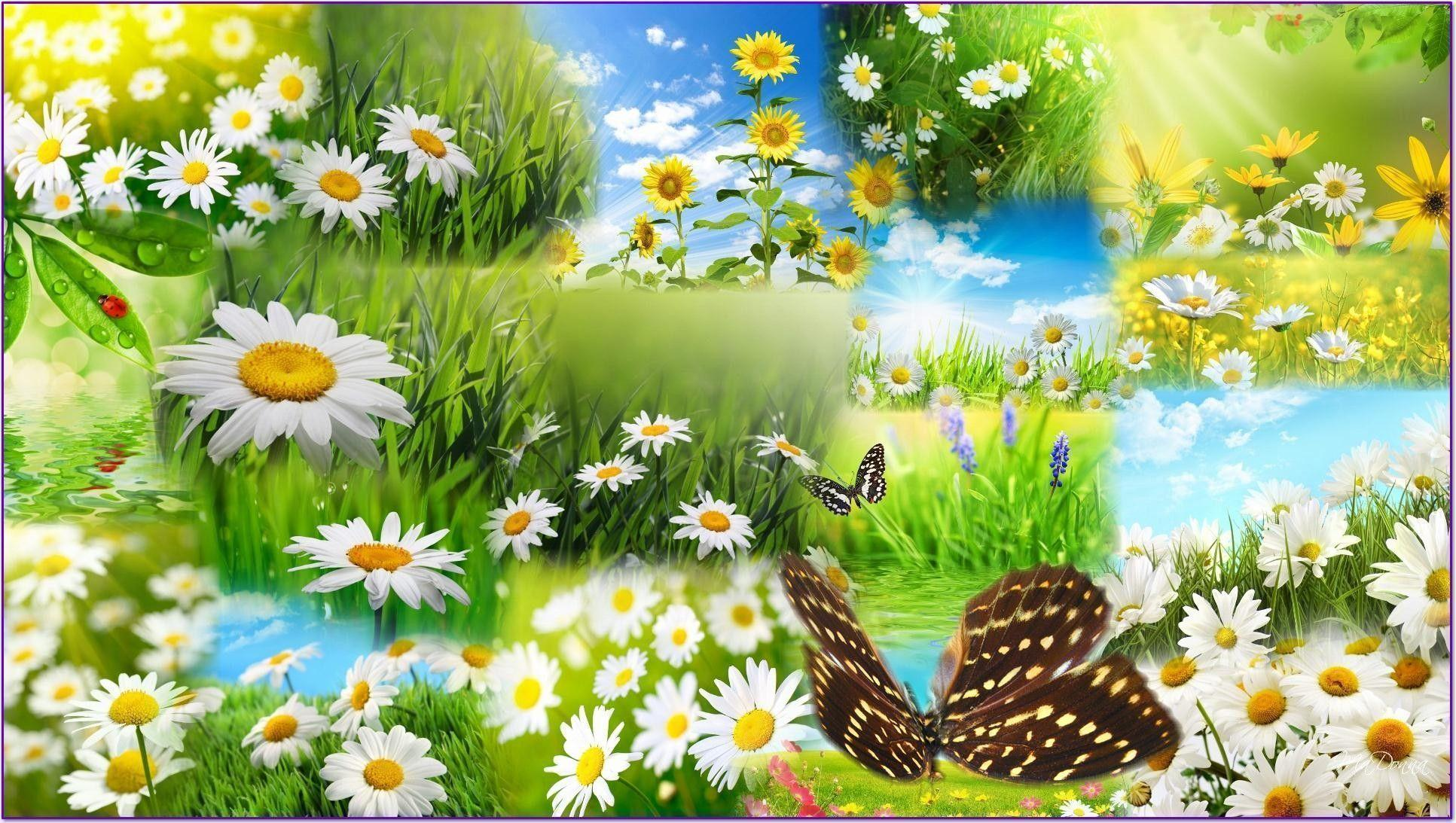 Spring Images Stock Photos amp Vectors  Shutterstock