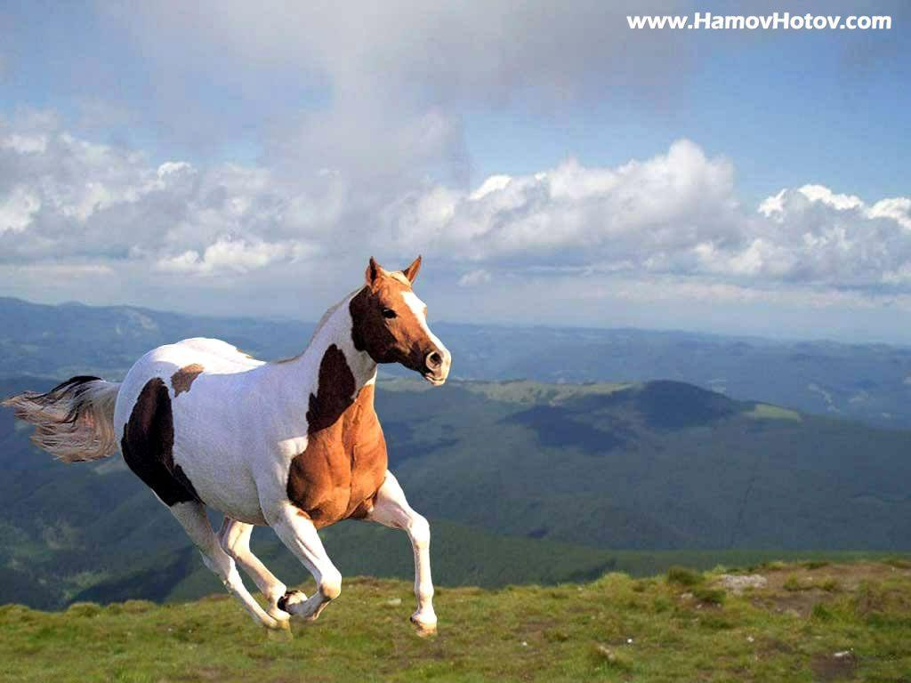 7 running horse wallpaper desktop background: Running Wallpapers Desktop