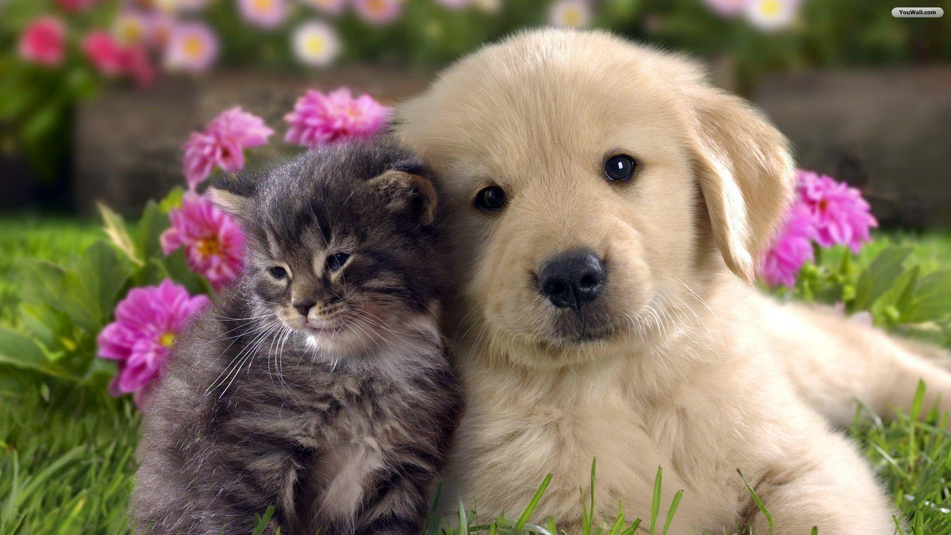 Cat And Dog Wallpapers 90 20852 High Definition Wallpapers