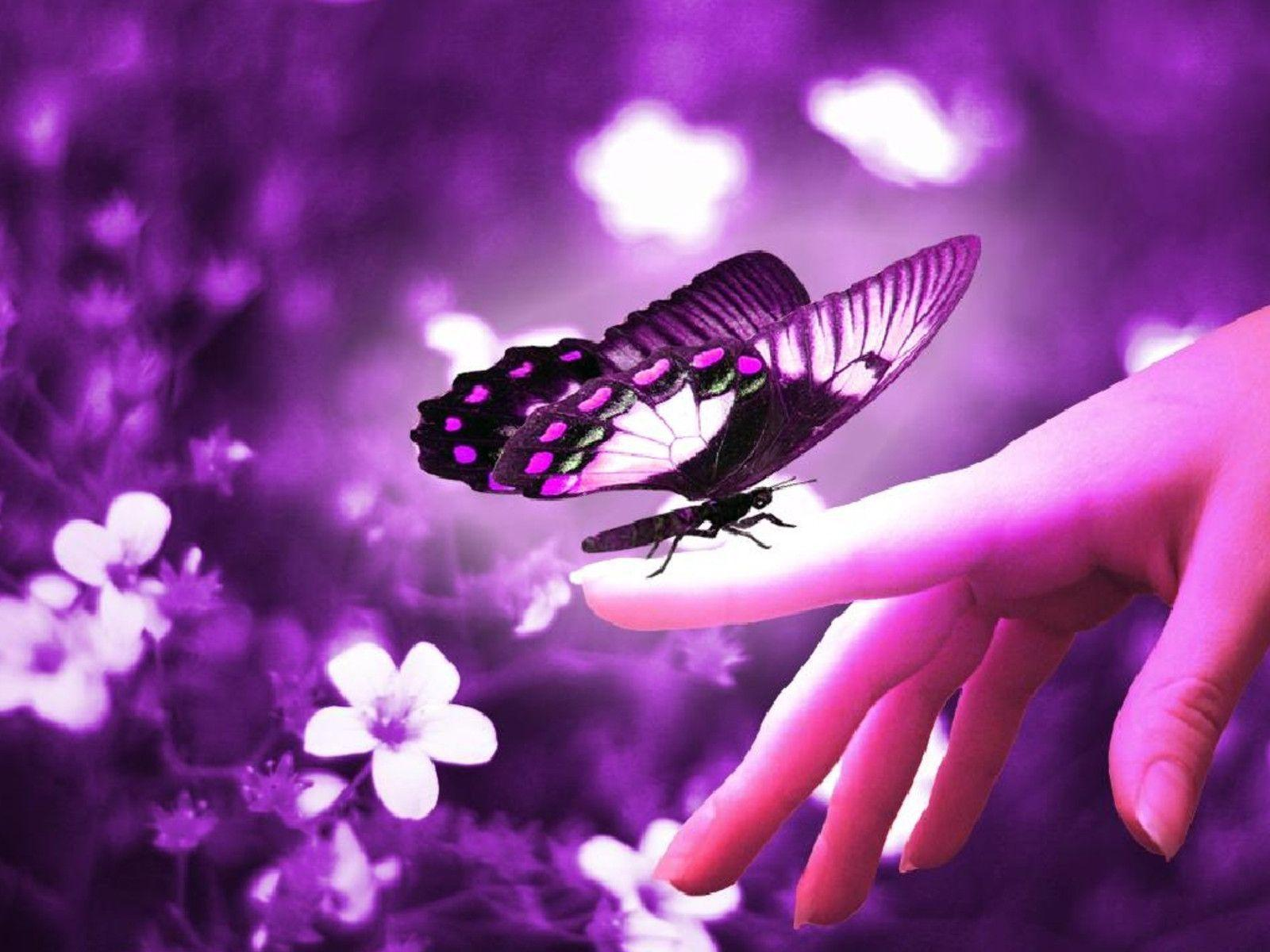 Wallpapers Butterflies Wallpaper Cave