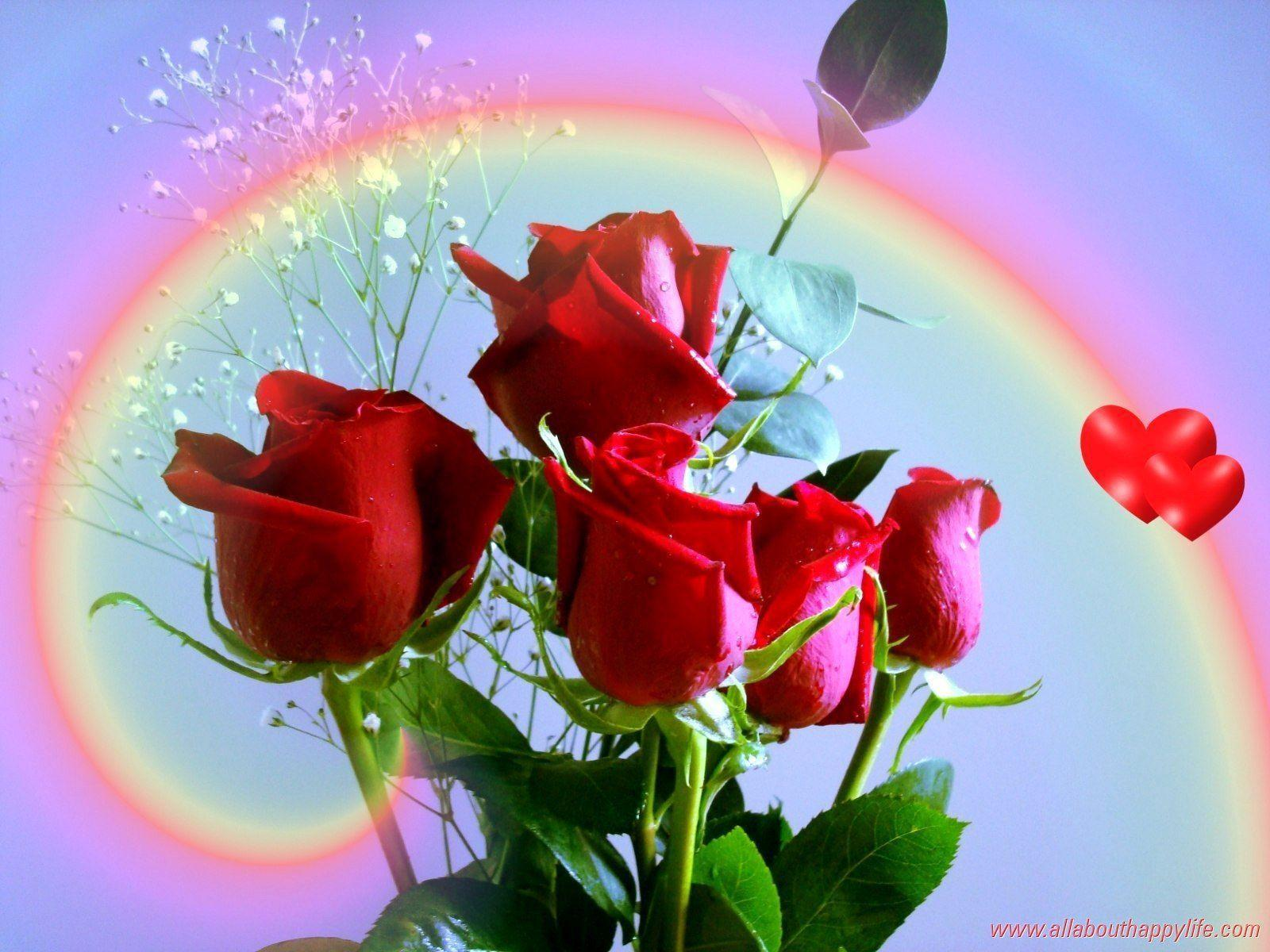 Red rose love wallpapers wallpaper cave - Images of red roses hd ...