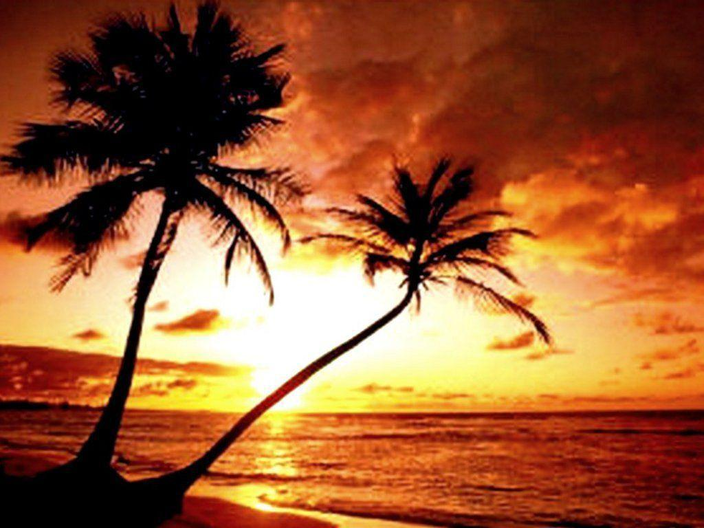Hd Tropical Island Beach Paradise Wallpapers And Backgrounds: Free Beach Sunset Wallpapers