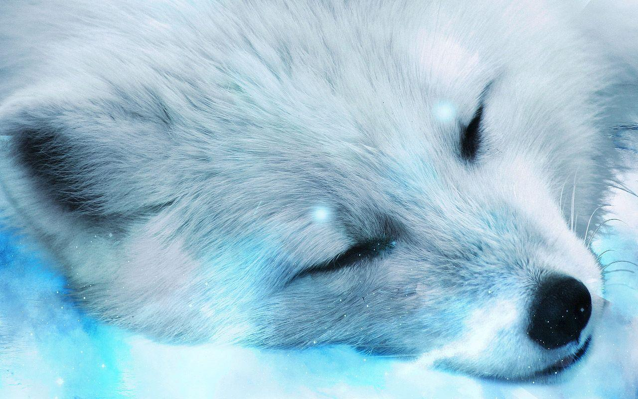 Arctic Fox Close Up Wallpaper Animal Desktop Background