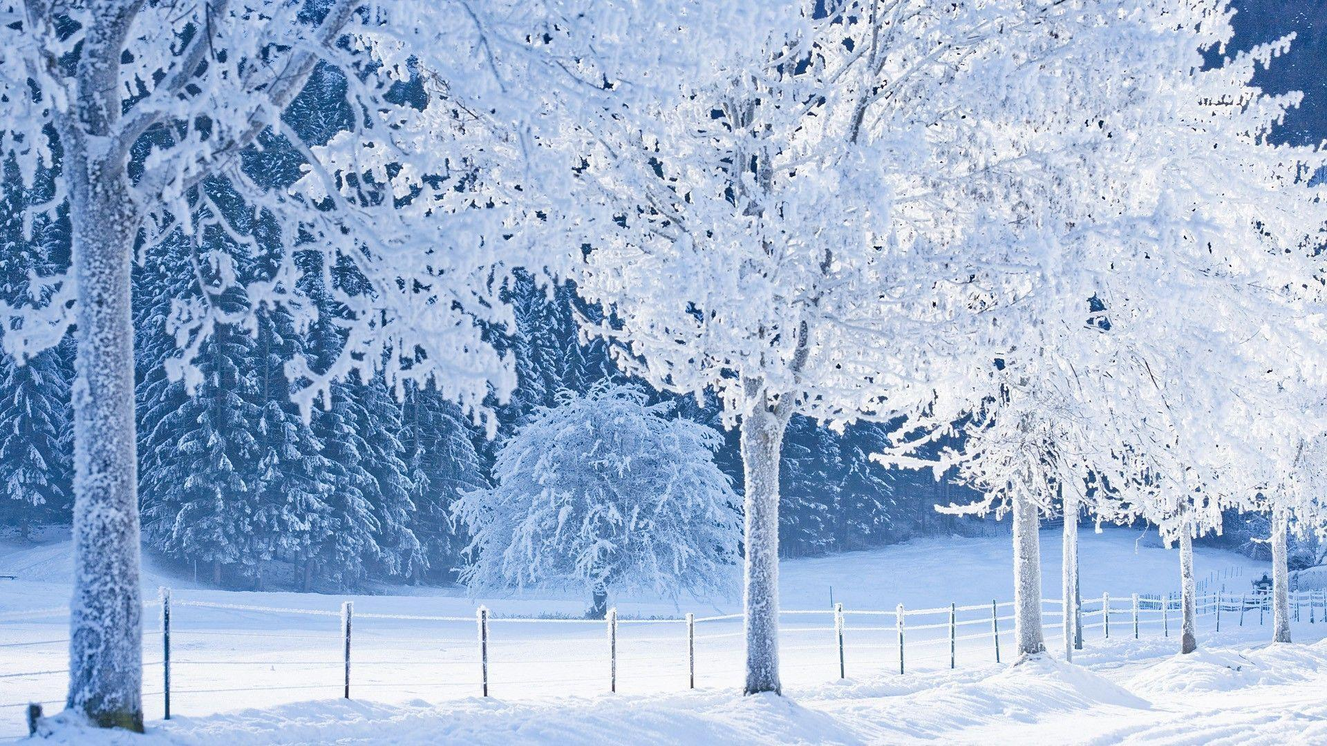 Real Snowy Backgrounds Wallpaper Hd