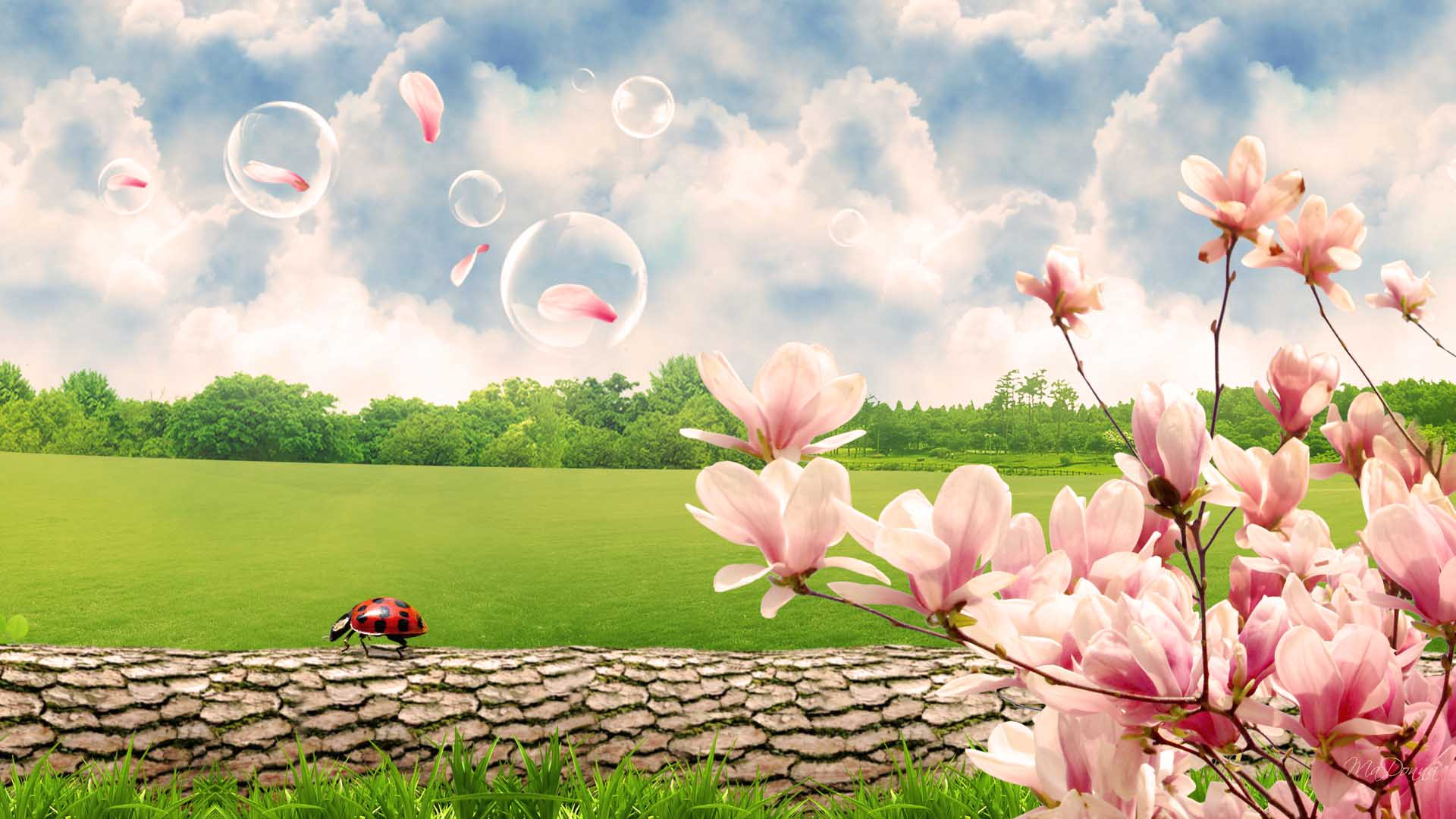 spring natural scenery hd - photo #44