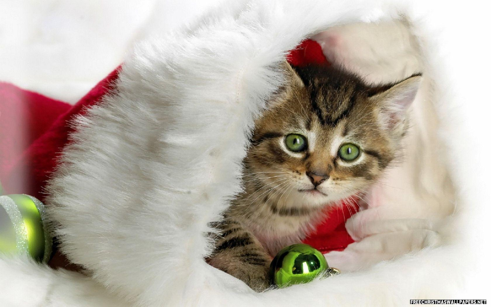 Cute Christmas Kitty Wallpaper