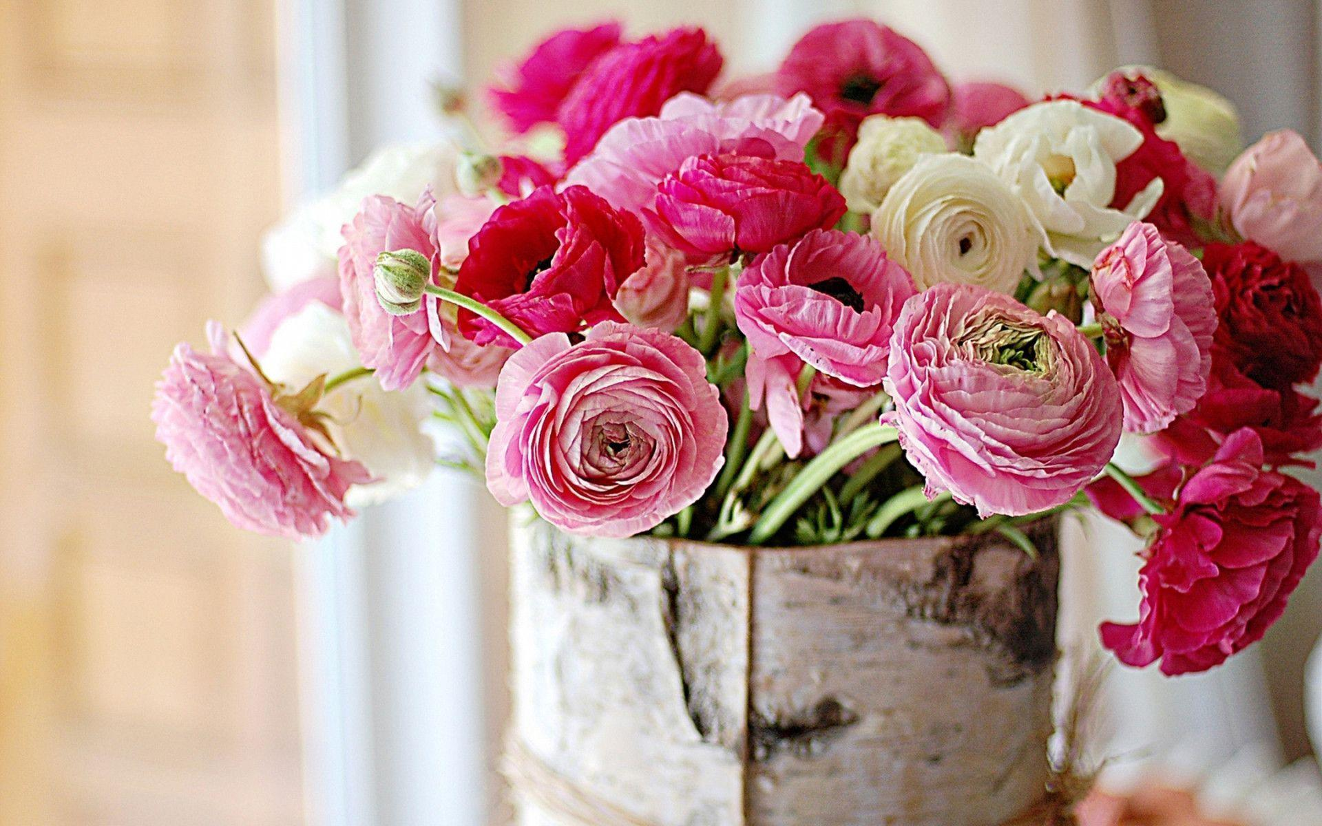 coral peonies wallpapers high - photo #22