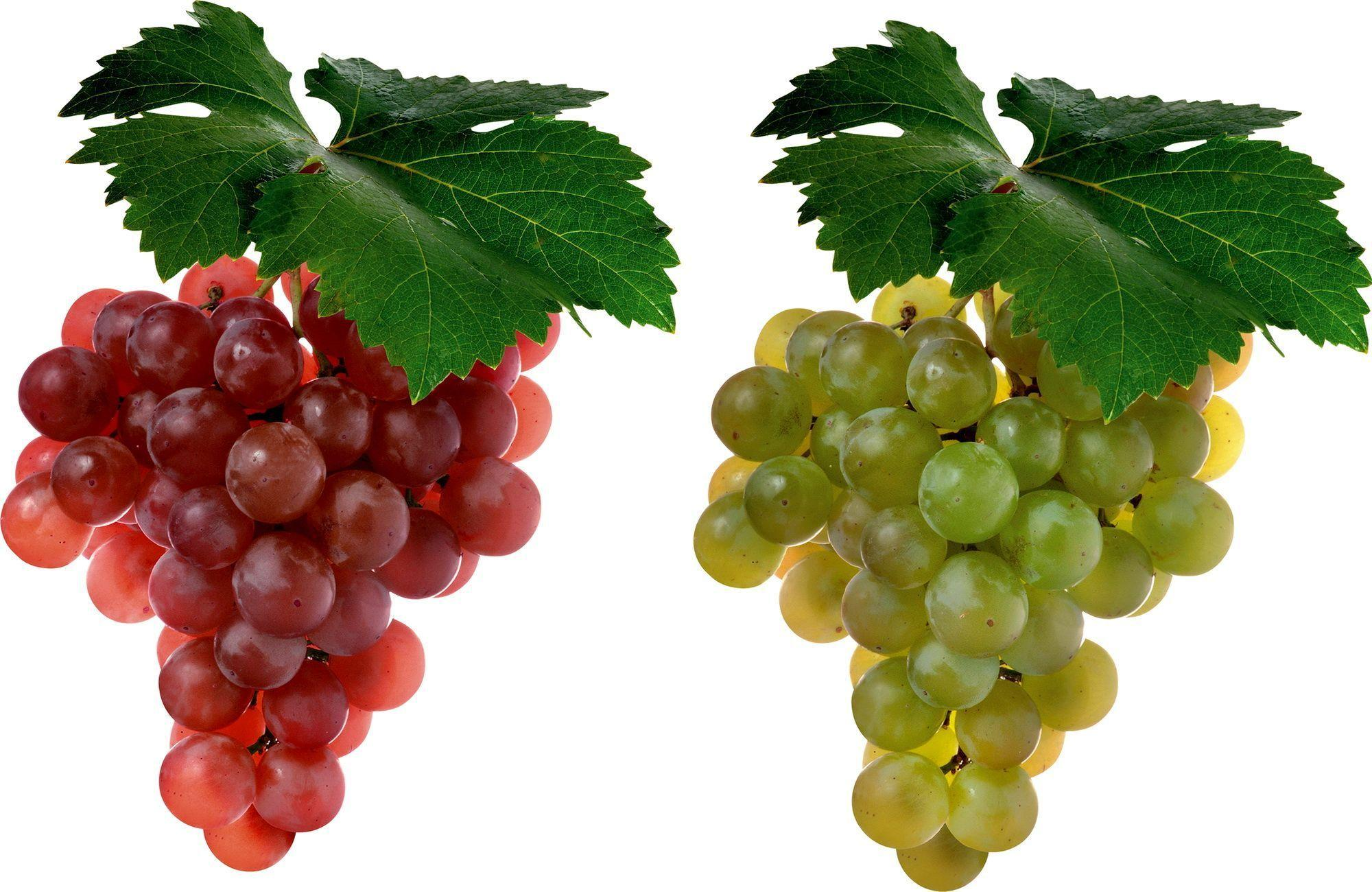 Grapes Wallpapers - Wallpaper Cave