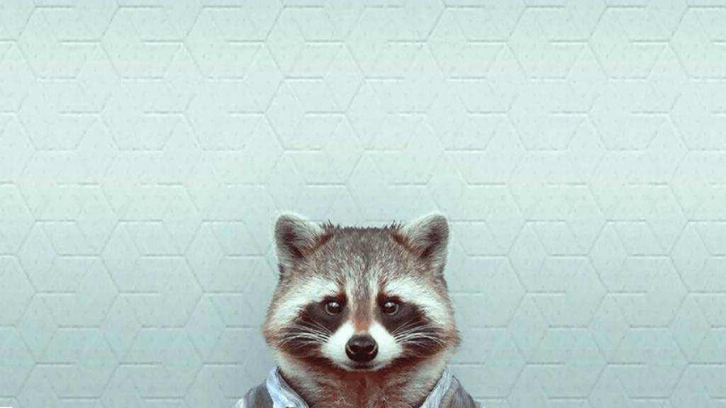 Raccoon Wallpapers Wallpaper Cave