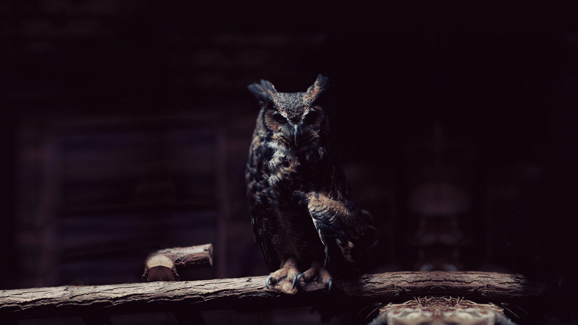 owl wallpaper | owl wallpaper - Part 2