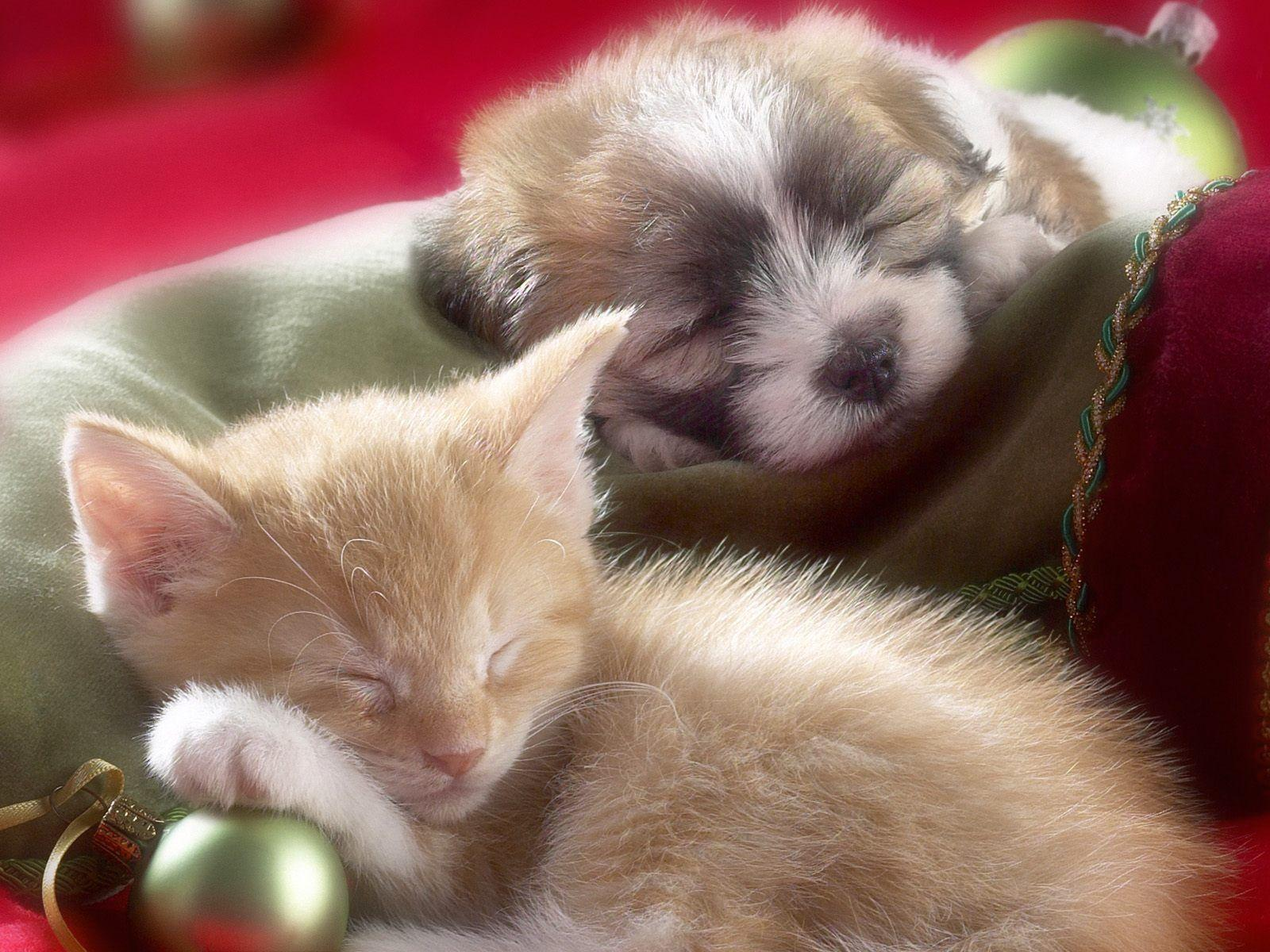 Cute Puppy And Kitten Wallpapers