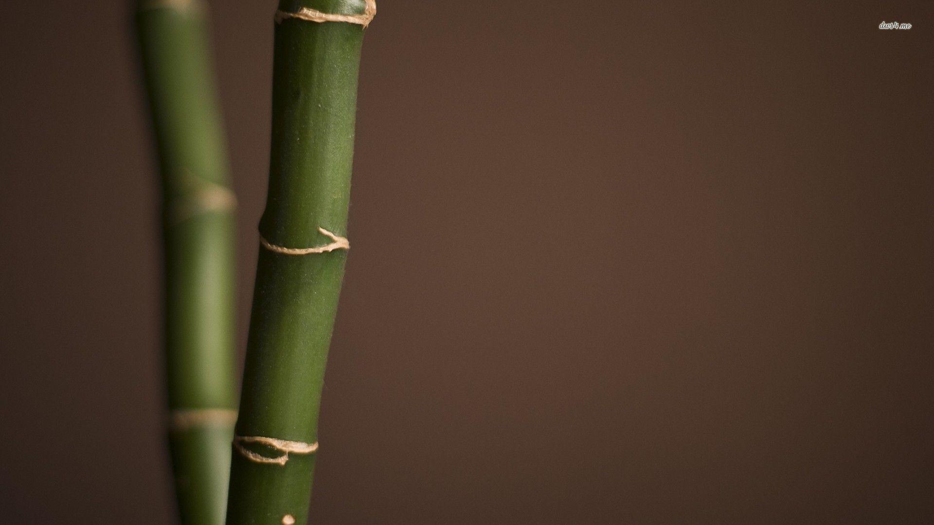 bamboo background nineteen photo - photo #21