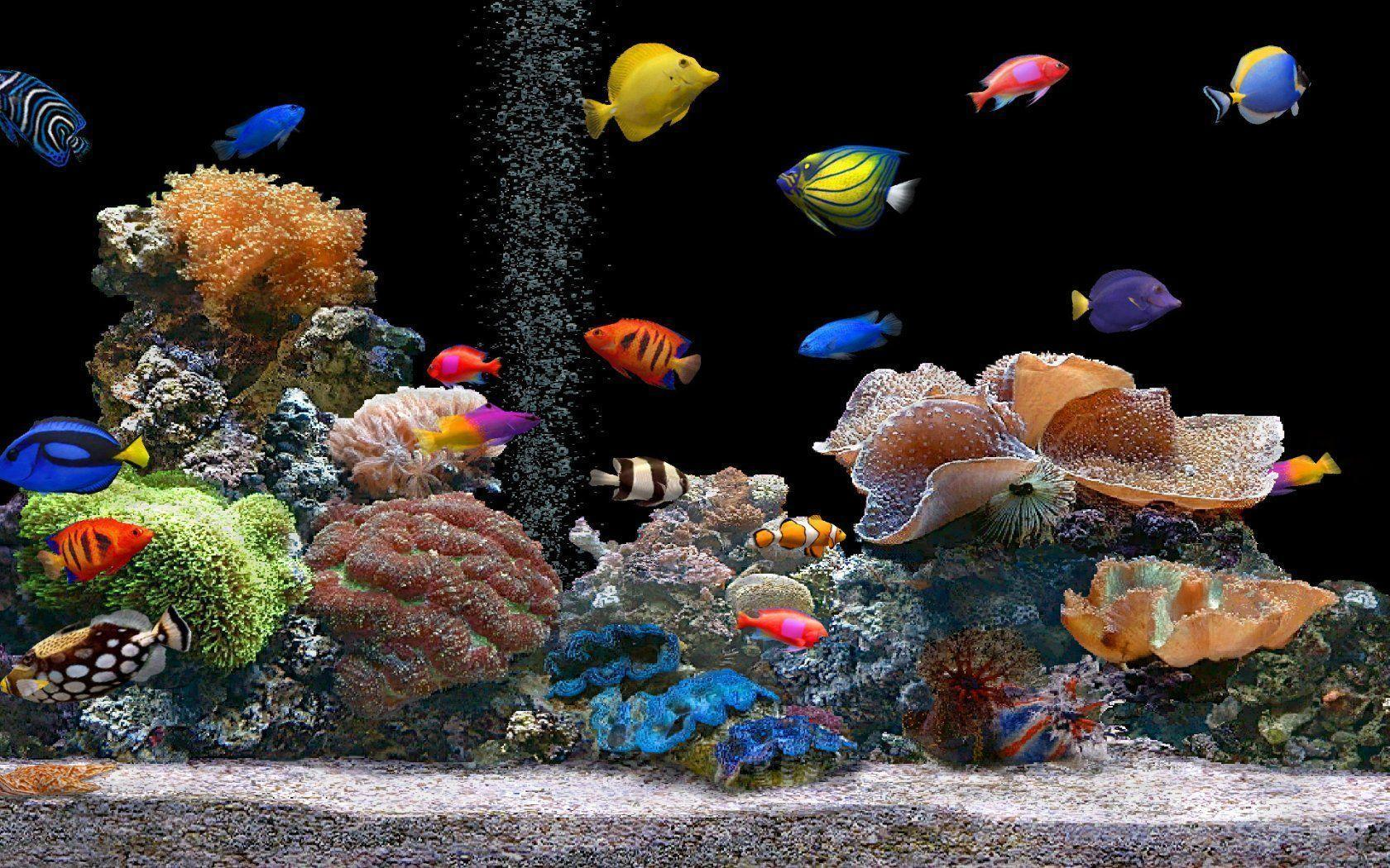 HD Aquarium Backgrounds