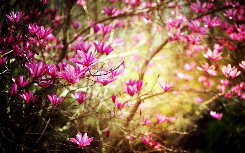 Download Free Spring Wallpaper | coolstyle wallpapers.