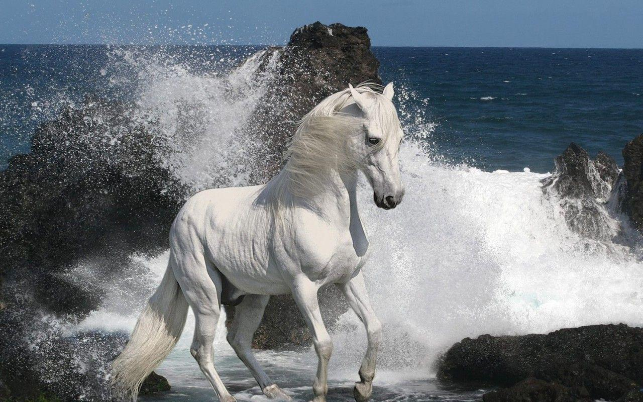 White Horse Running Wallpapers Wallpapers