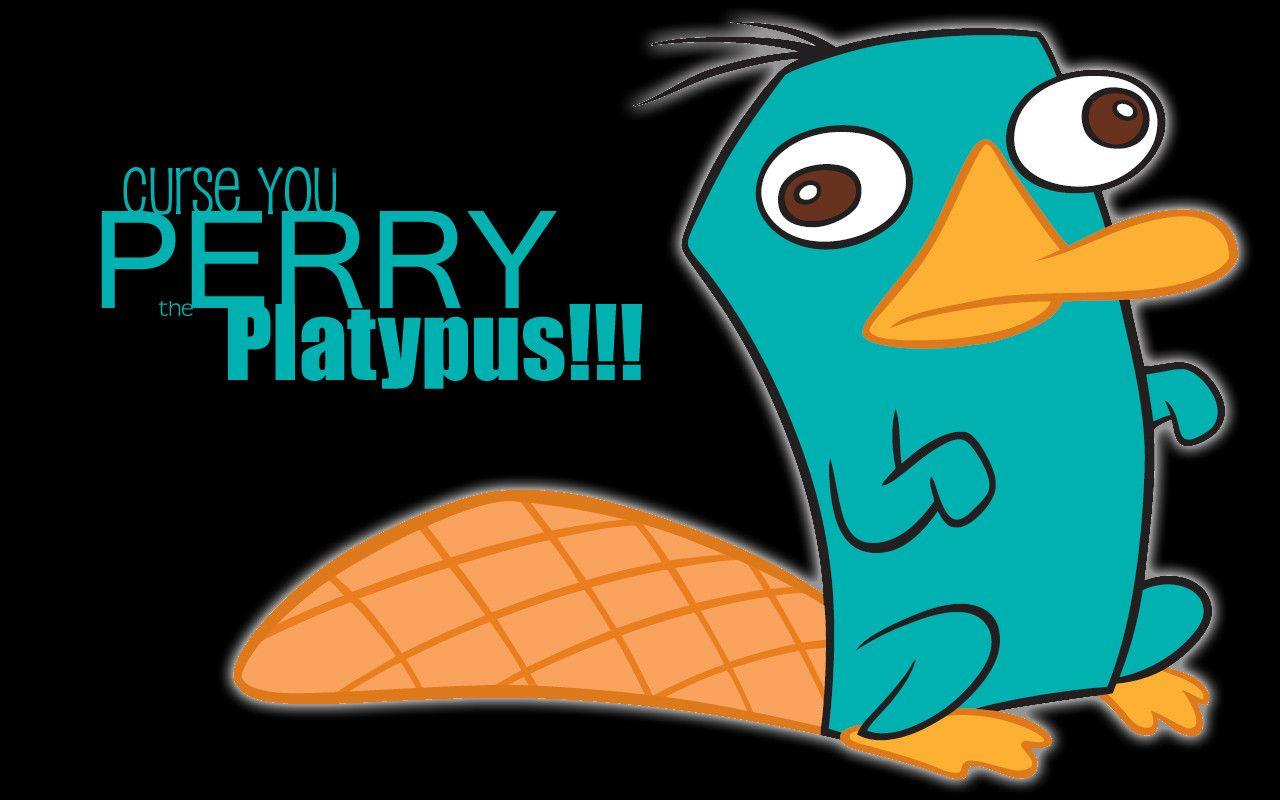 perry the platypus wallpapers 28 wallpapers � hd wallpapers