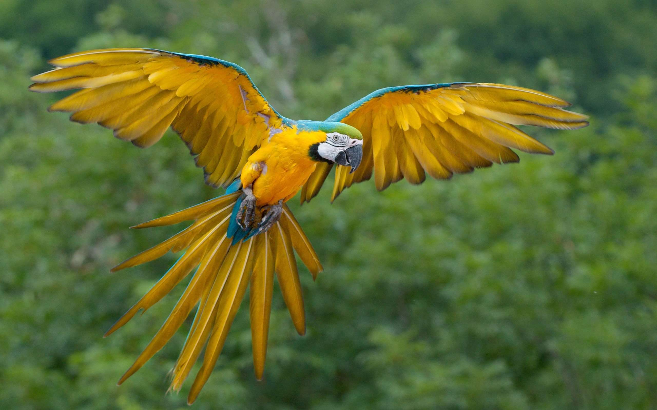 Macaw Parrot Wallpaper | High Quality PC Dekstop Full HD Wallpapers