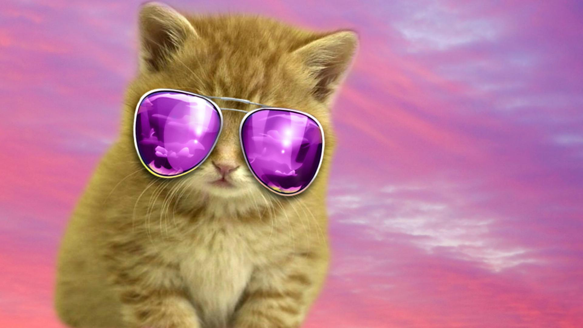 Http Wallpapercave Com Cool Cat Backgrounds
