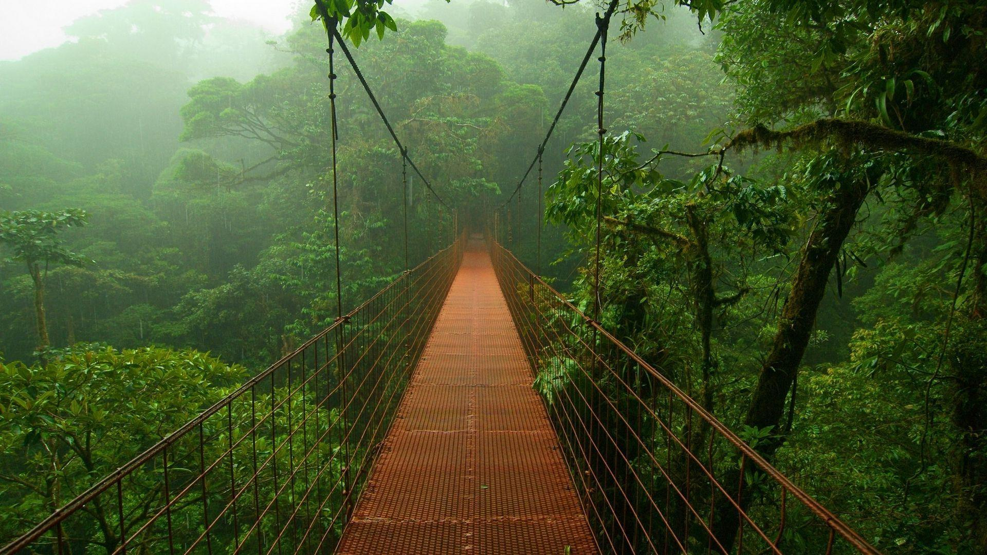 Suspended bridge in the jungle Wallpapers #