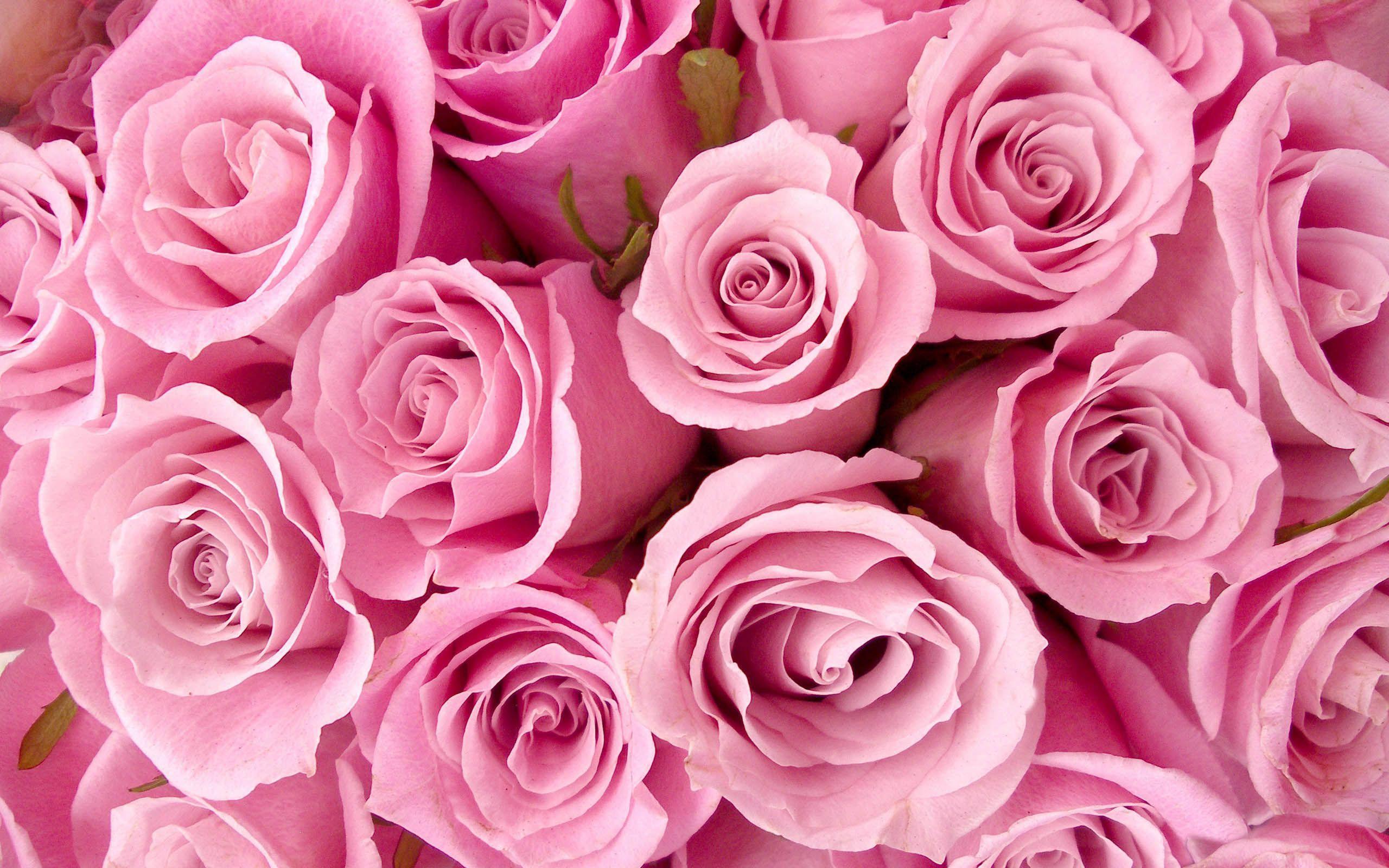 Breathtaking Flowers Pretty Pink Background Hd Wallpapers