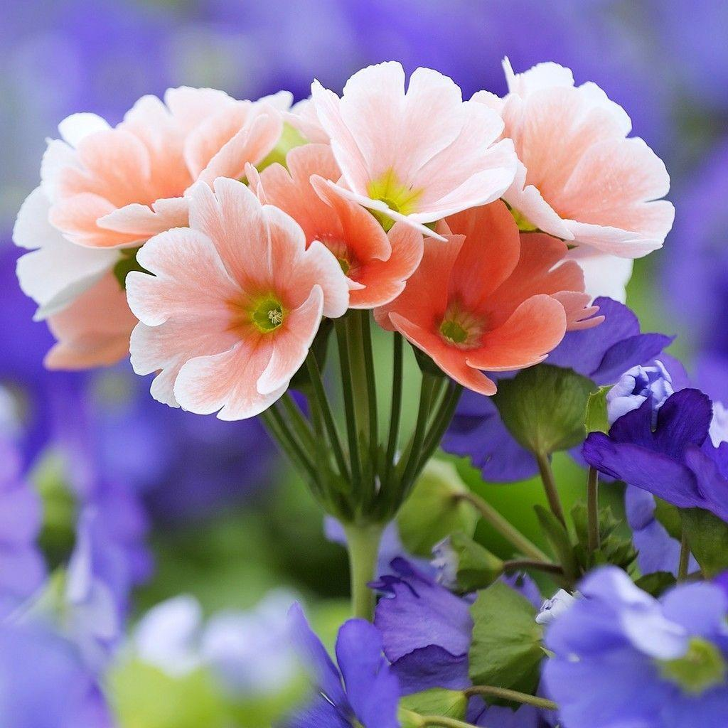 Beautiful Bright Flowers Wallpapers