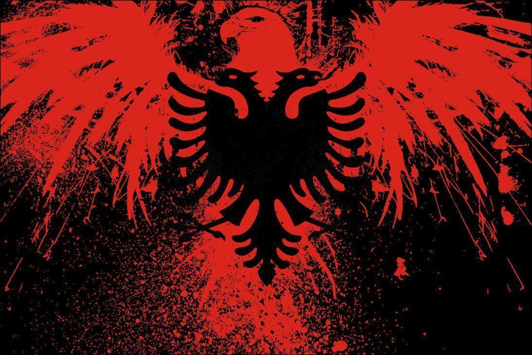 Albanian Eagle Shrook Wallpapers 1094x730 px Free Download