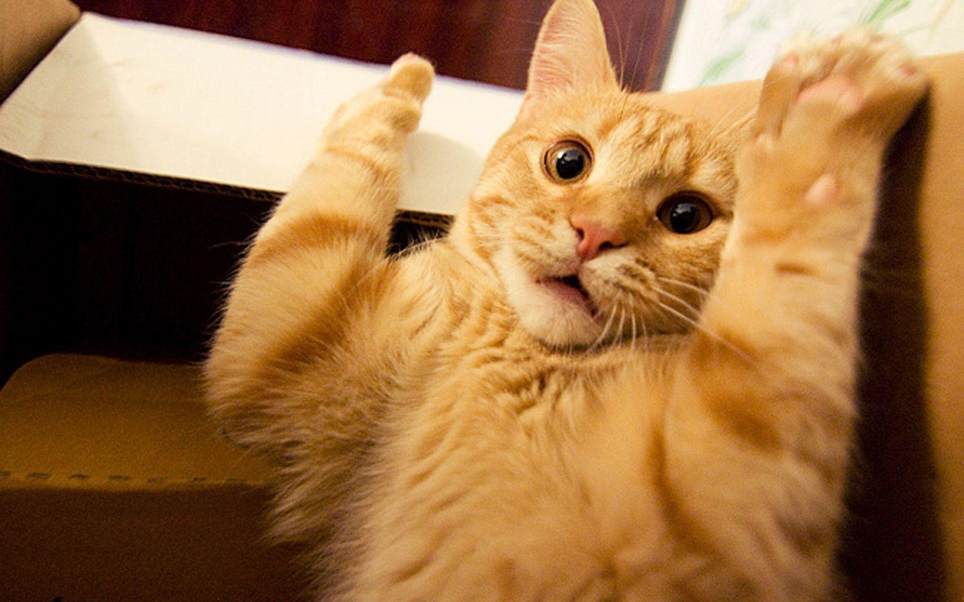 Funny Cats: Funny Cat Desktop Wallpapers