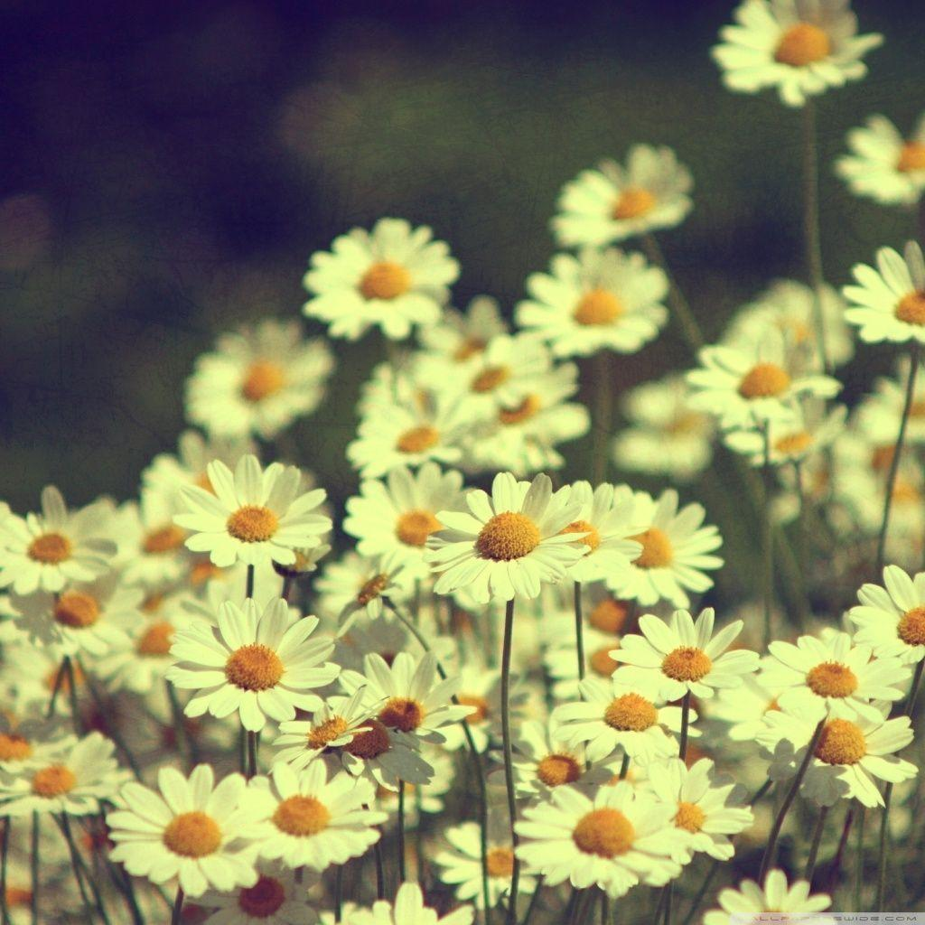Vintage Quotes Indie Grunge Tumblr Backgrounds Flowers