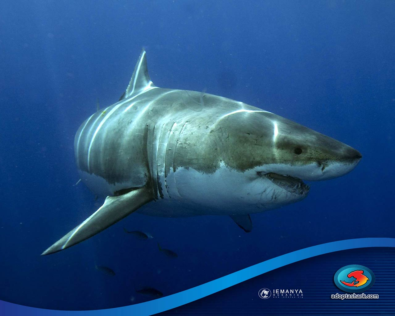 great white wallpapers wallpaper cave