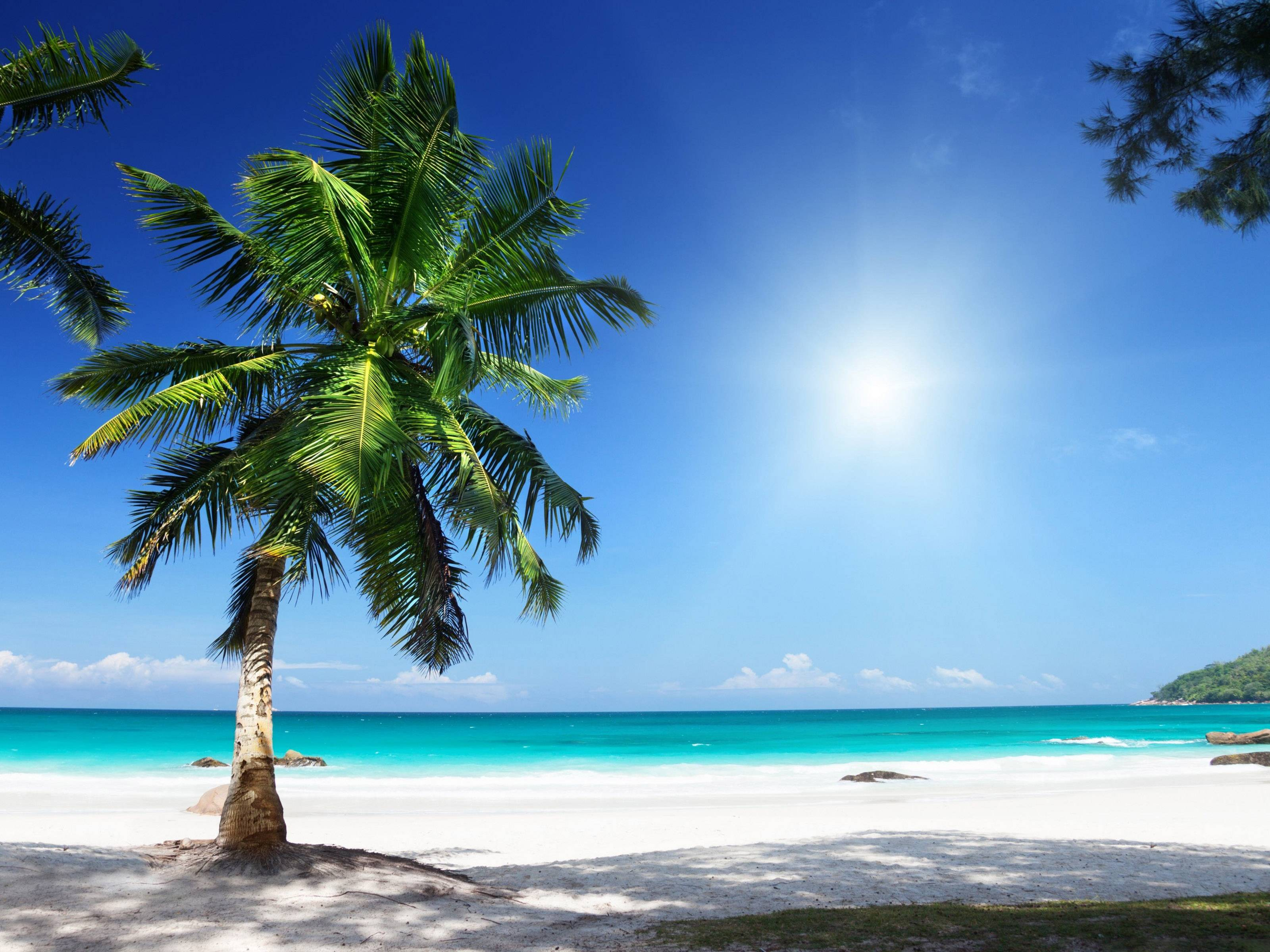 Hd Tropical Island Beach Paradise Wallpapers And Backgrounds: Sunny Beach Wallpapers