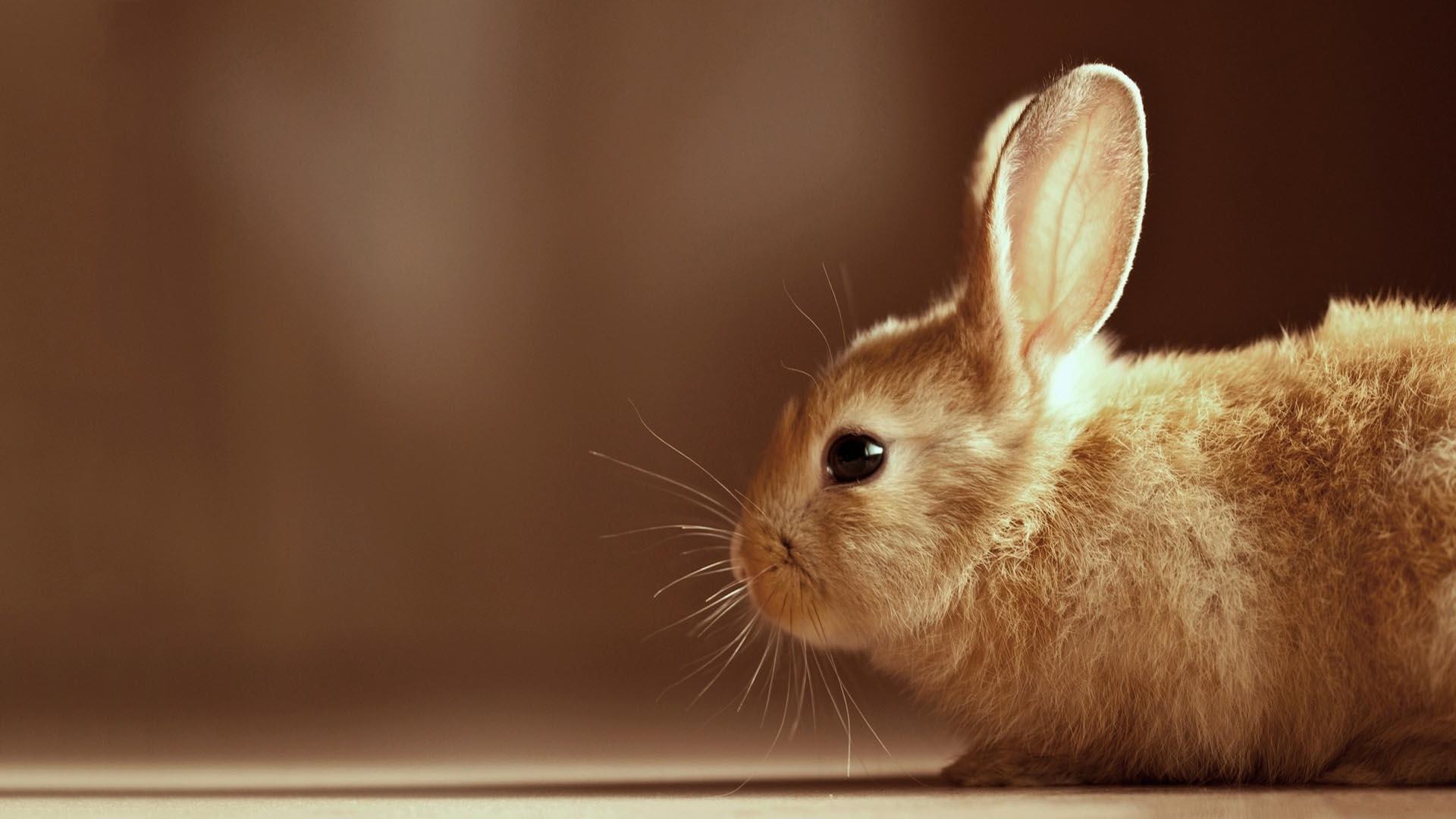 cute bunny wallpapers - wallpaper cave