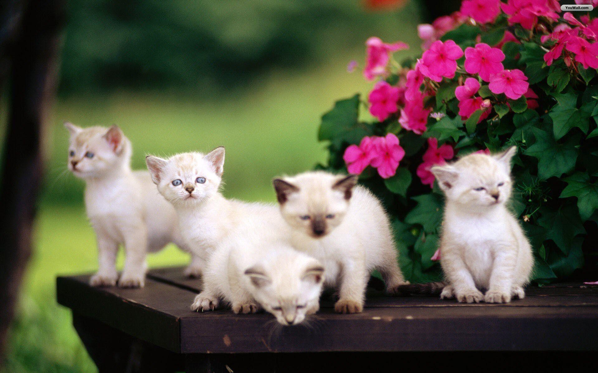 cute-wallpapers-kittens-7 - 2leepHD.