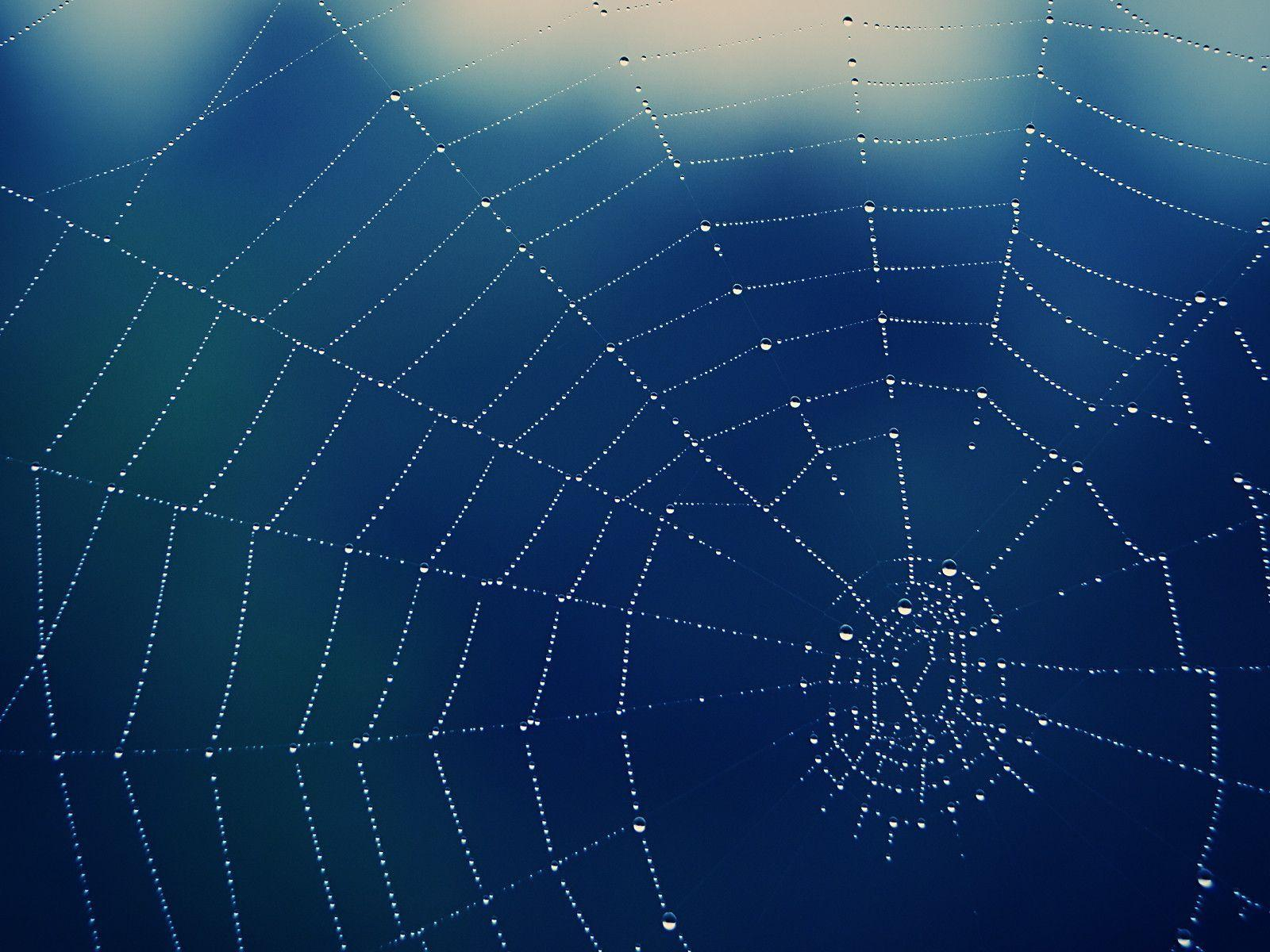 Spider Web Backgrounds Wallpaper Cave