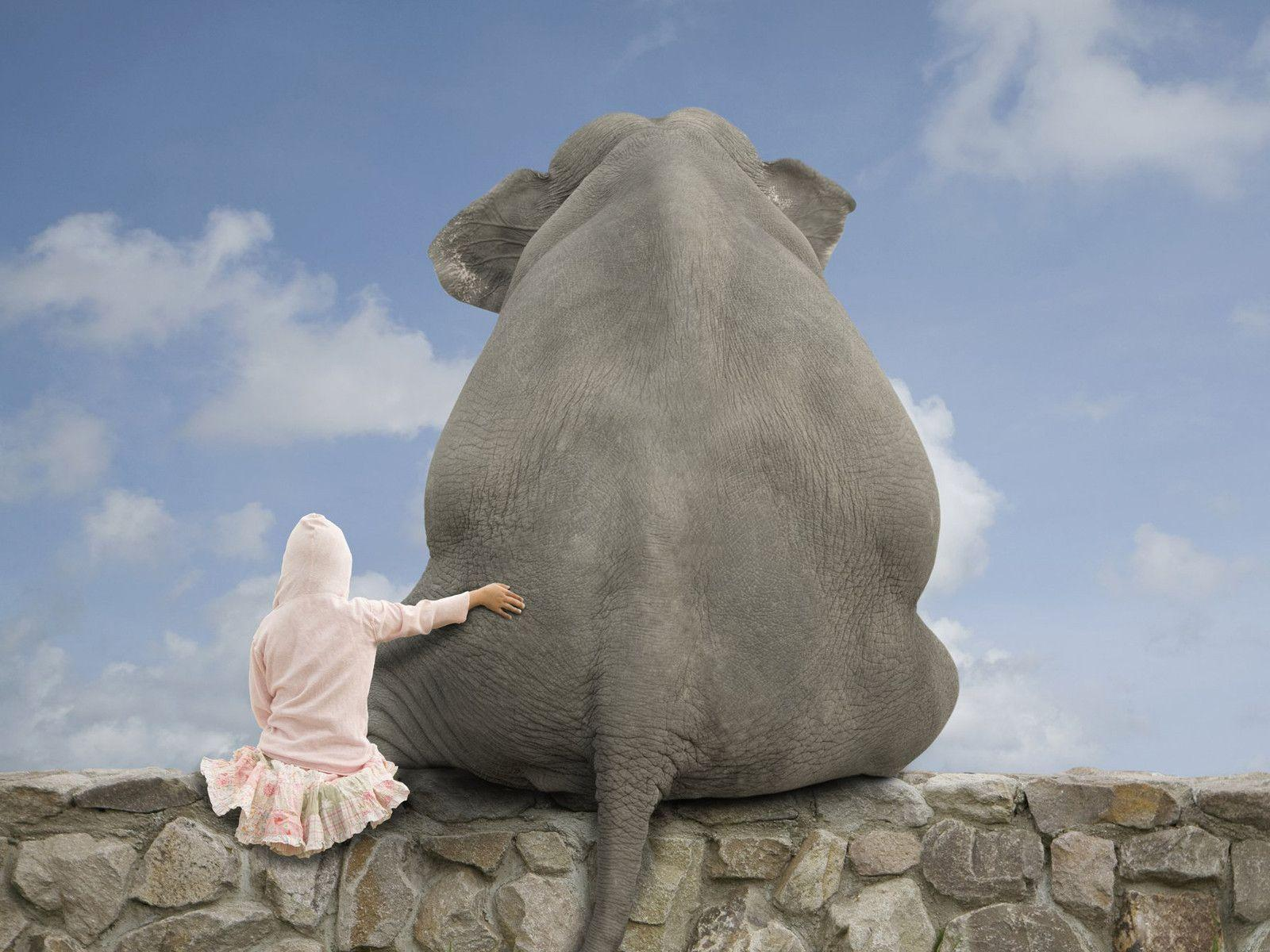 Elephant full hd wallpaper