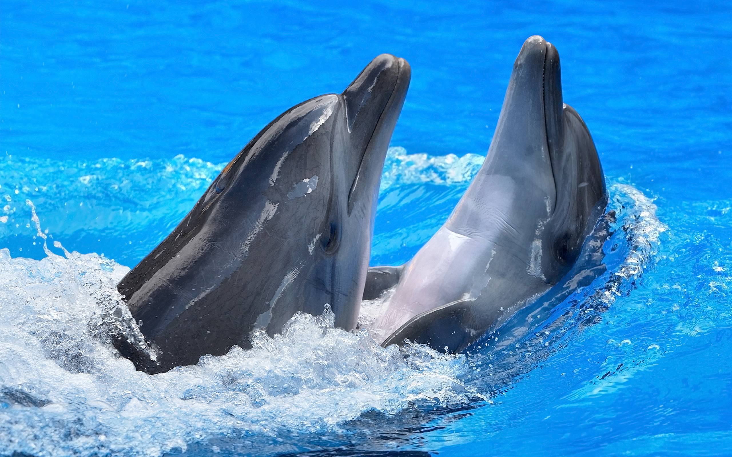 171 Dolphin Wallpapers | Dolphin Backgrounds