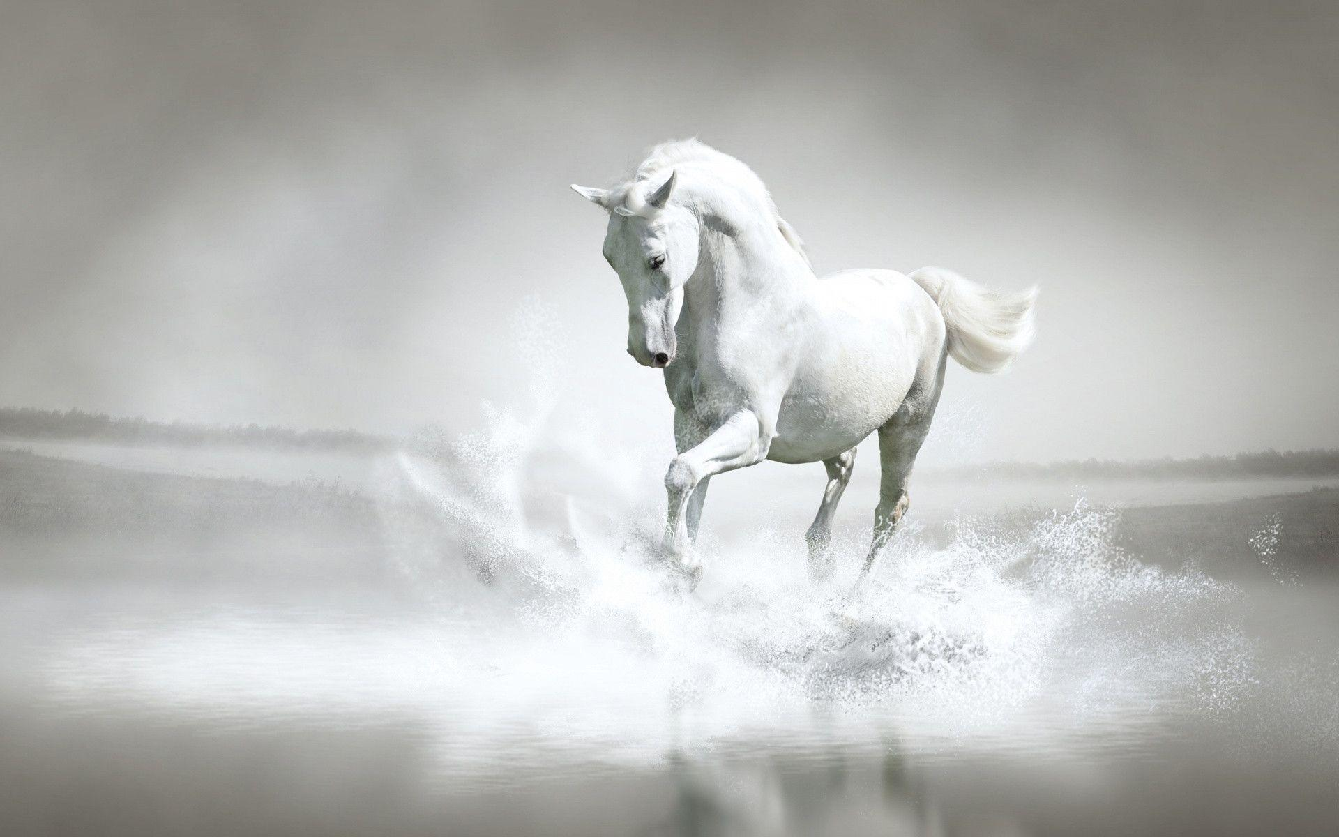 White Horse Wallpapers Wallpaper Cave