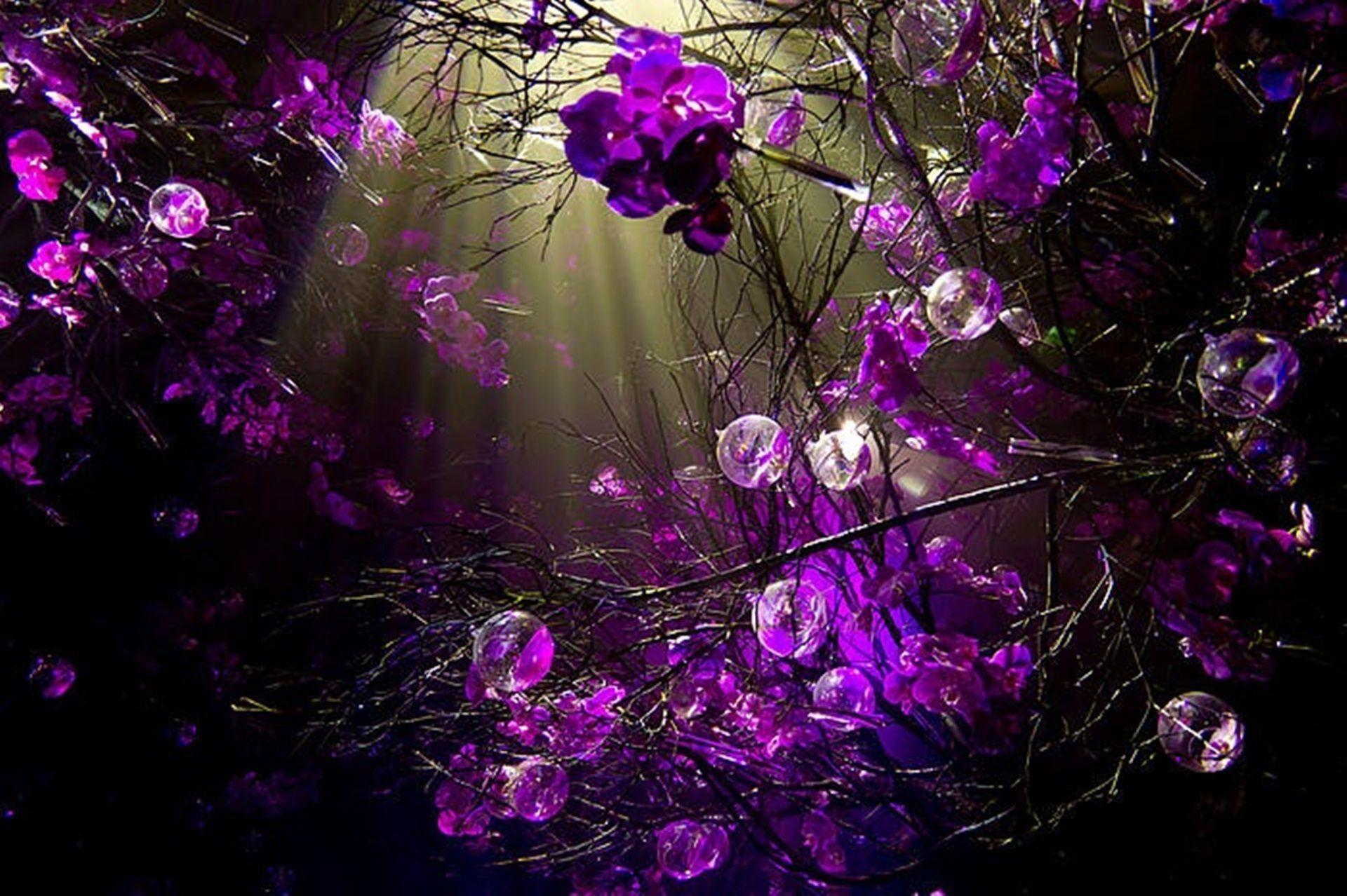 Purple Sprigs Desktop Background Wallpaper By Doantrangnguyen