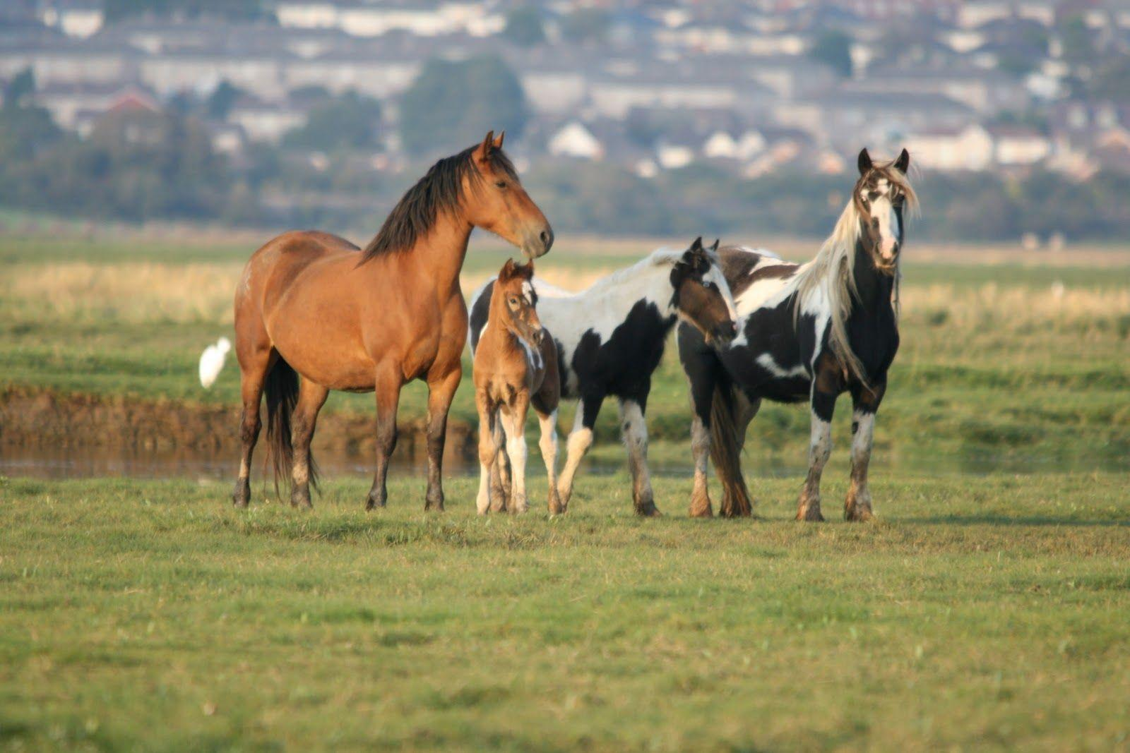 wild horses racing wallpaper - photo #1