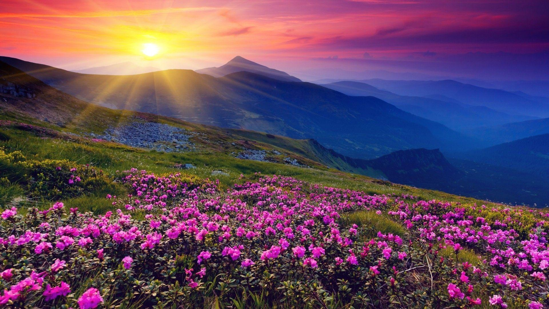 wild flowers wallpapers wallpaper cave