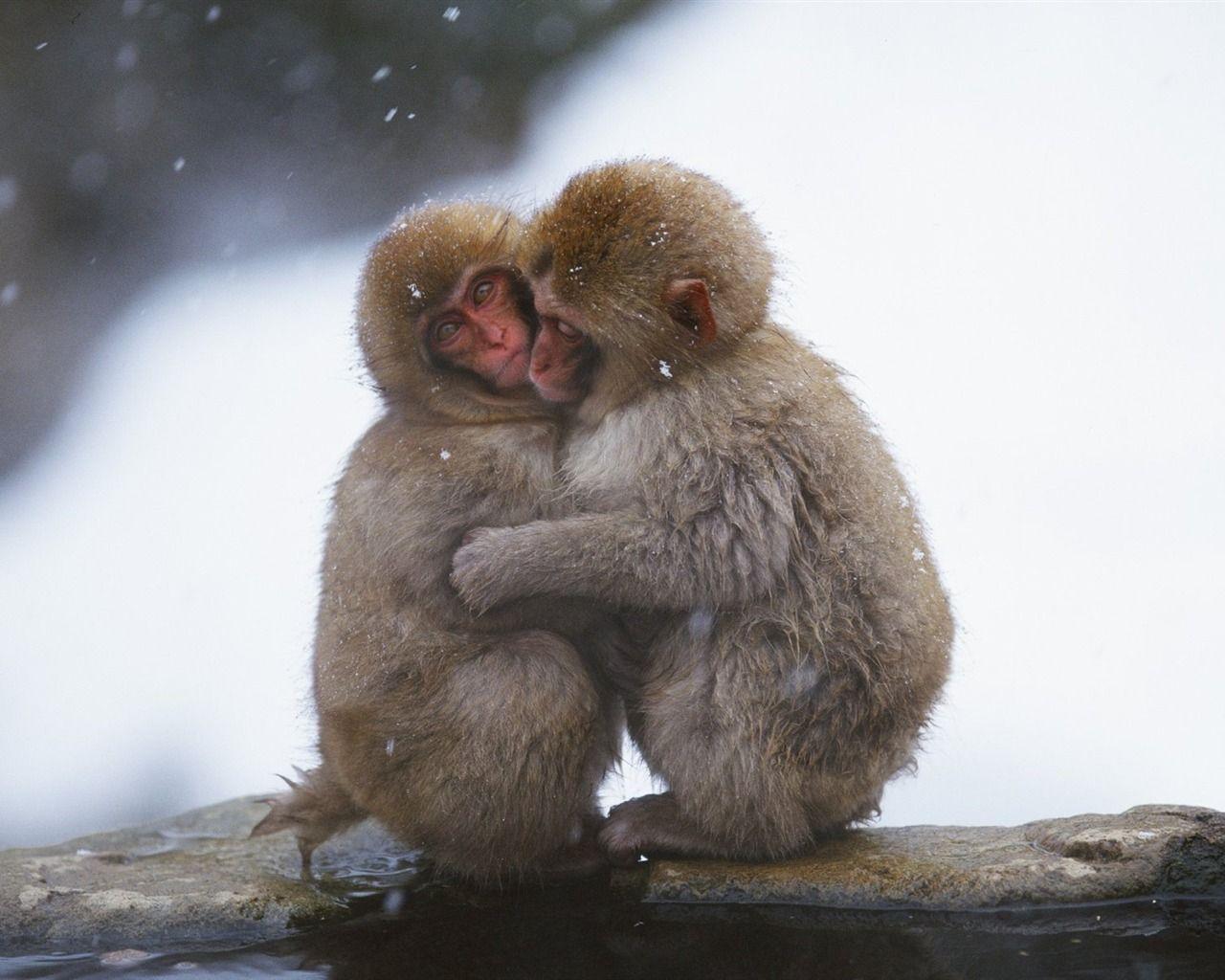 Snow hugged the monkey wallpaper - 1280x1024 wallpaper download -