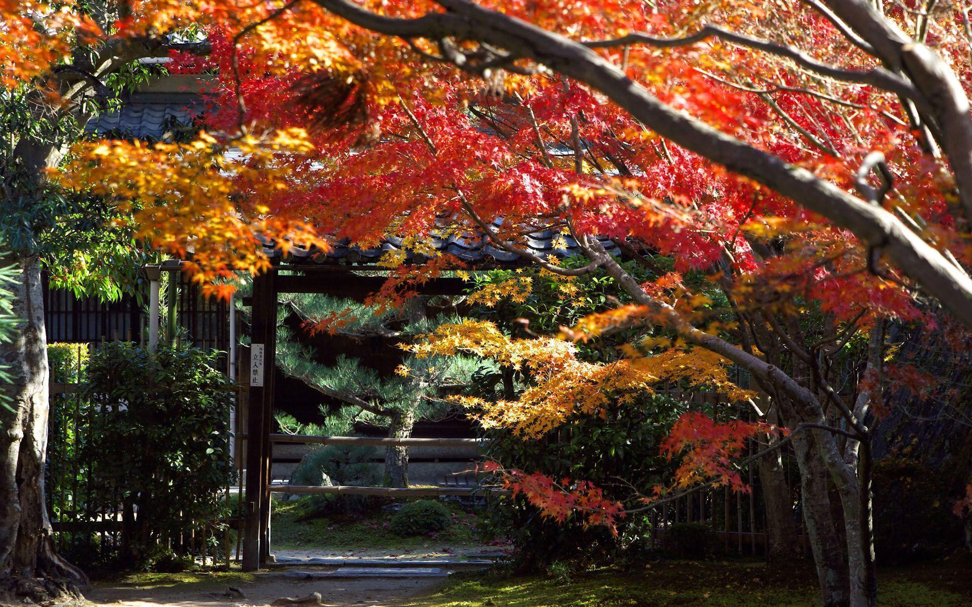 Building and City: Japan Wallpapers Widescreen, japanese garden