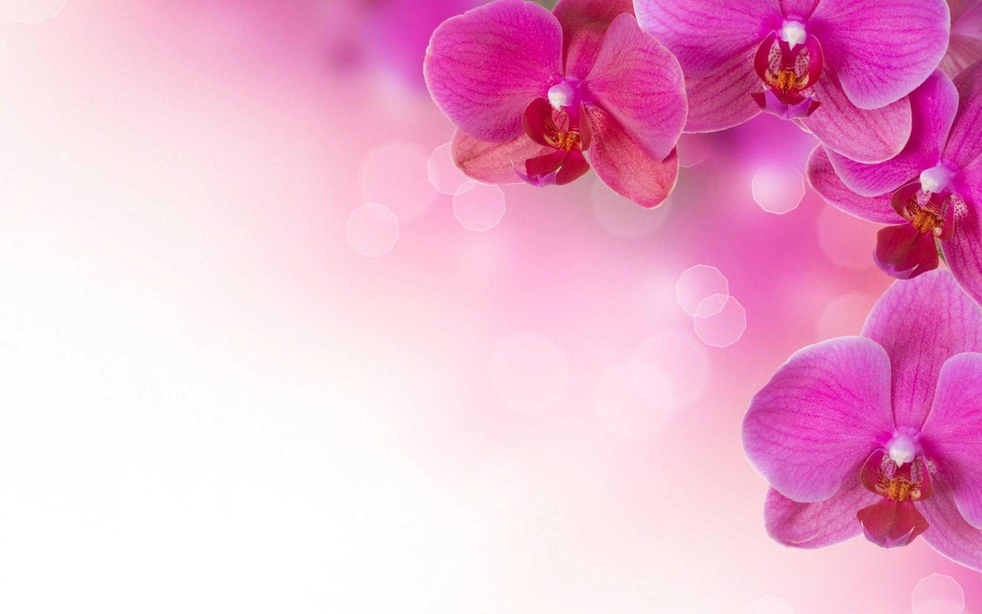 Pink Flower Image Backgrounds
