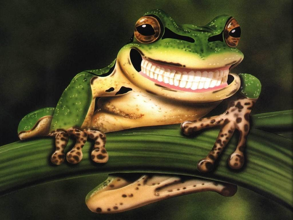 Funny frog pictures