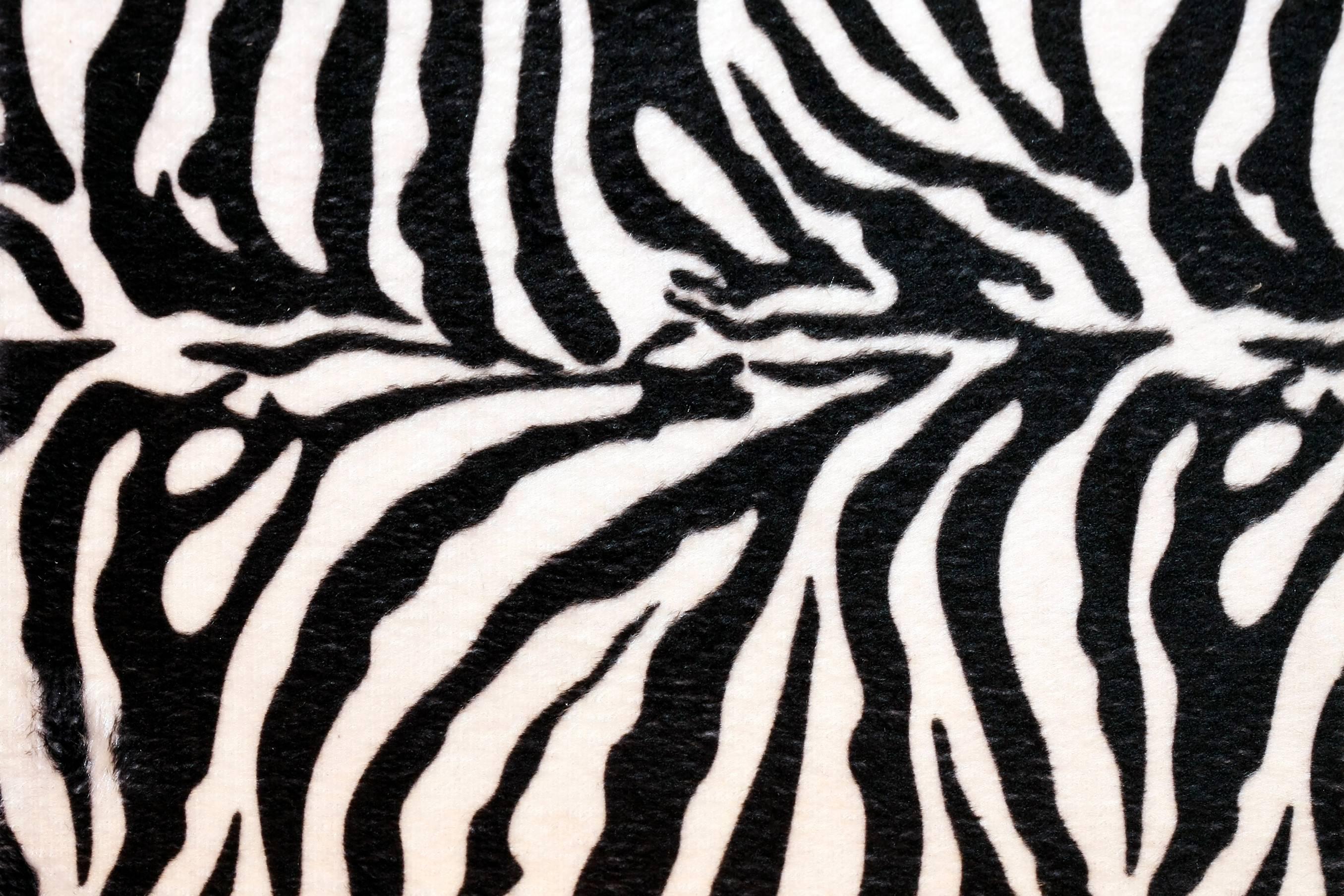 zebra desktop backgrounds wallpaper cave