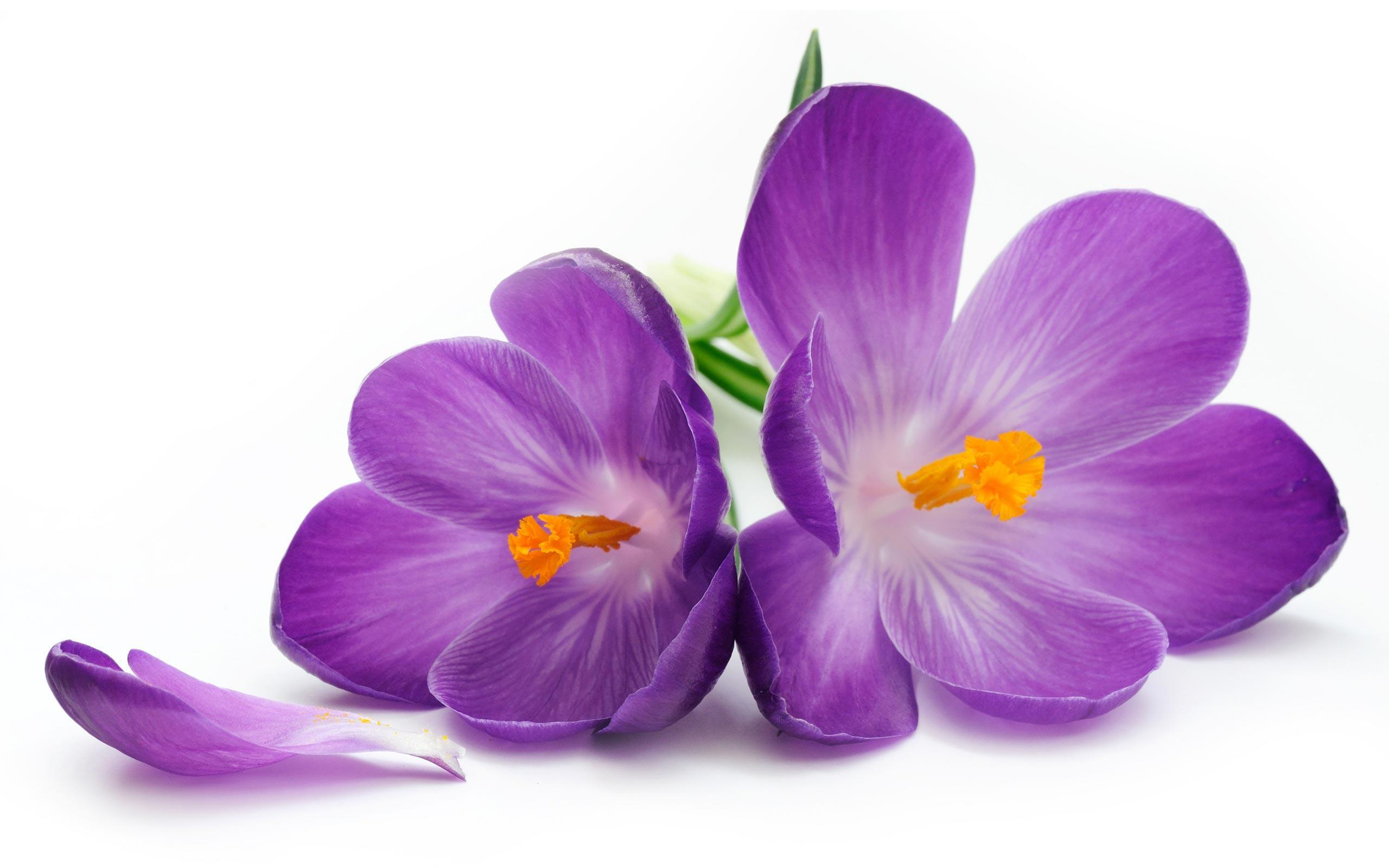 purple flowers wallpapers  wallpaper cave, Natural flower